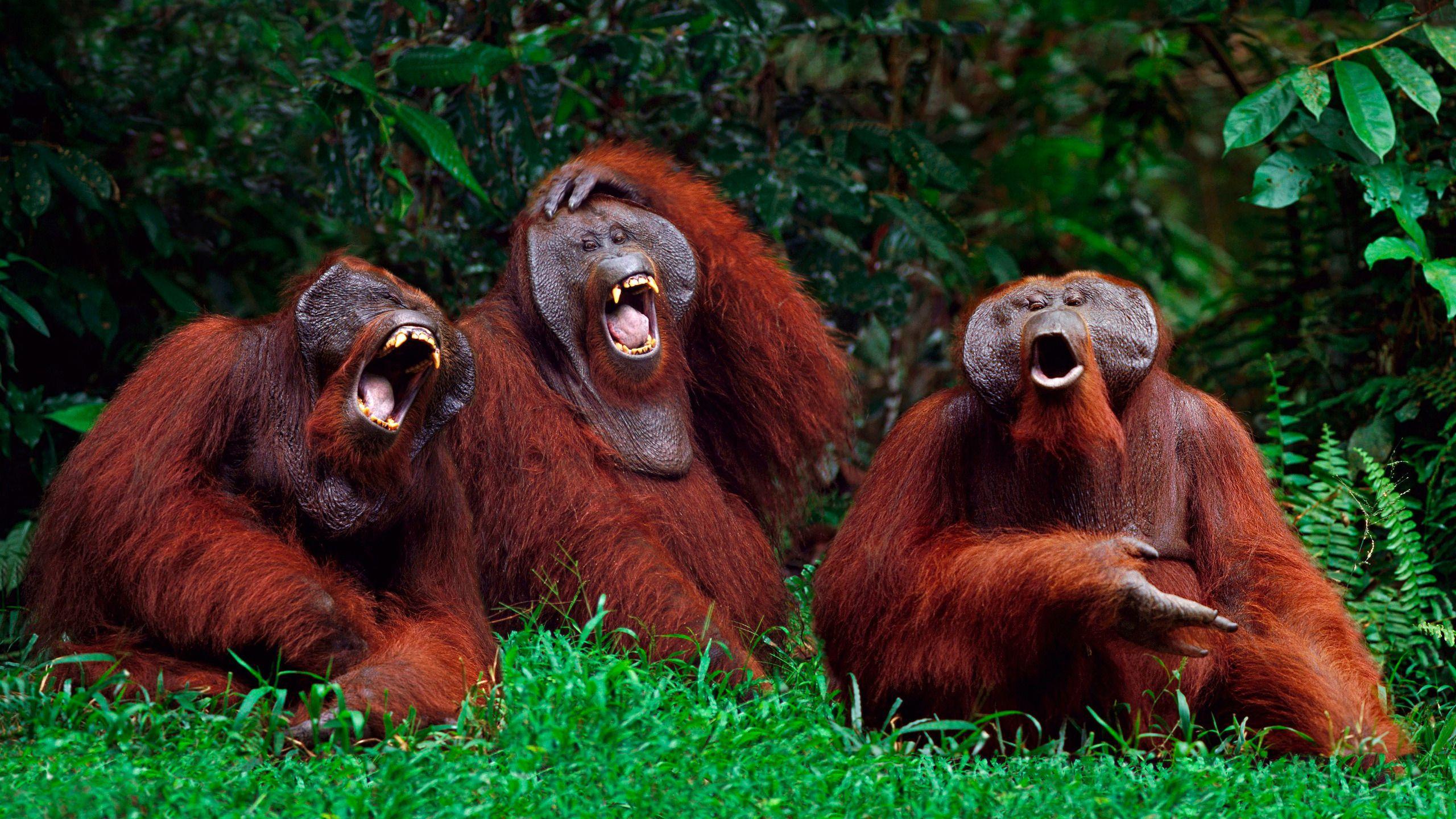Выяснилось, что гораздо больше животных умеет смеяться, чем предполагалось