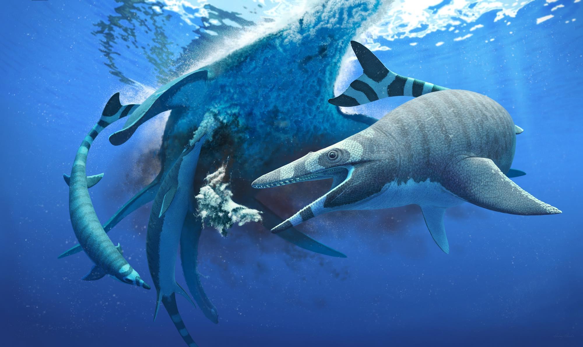 В Марокко нашли останки крупных хищников «ночных» морей мелового периода