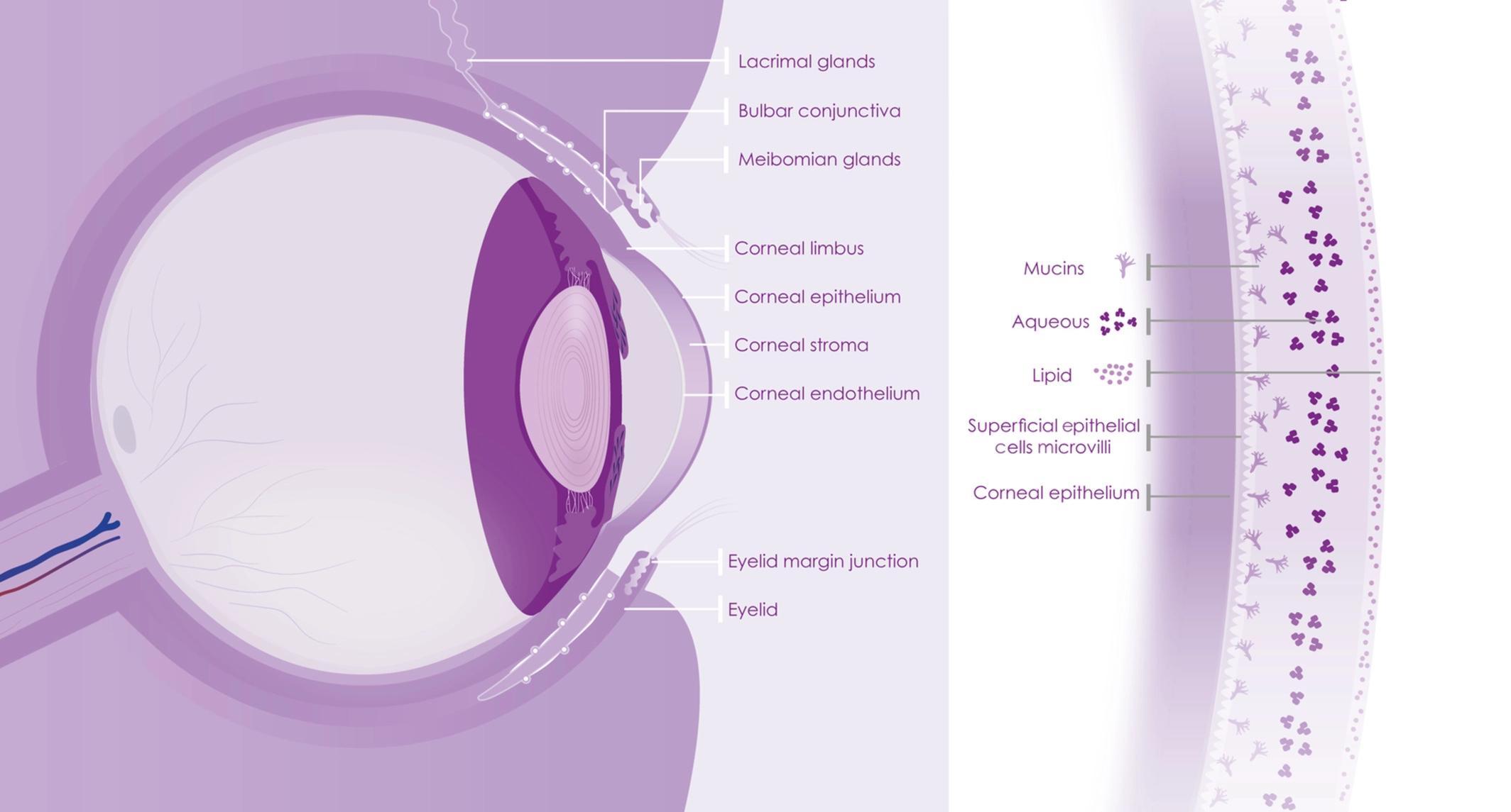 Ученые подтвердили способность SARS-CoV-2 заражать клетки глаза