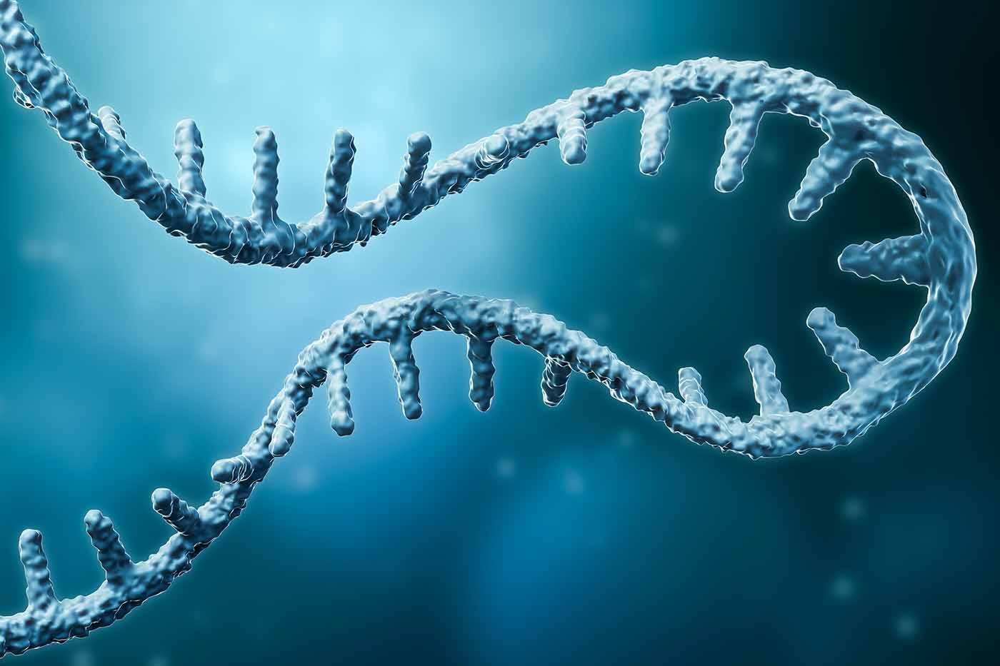 У человека генетическая информация может идти в обратную сторону