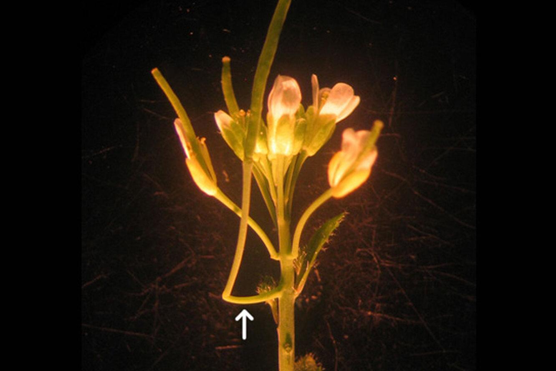Ботаники обнаружили новый орган растений