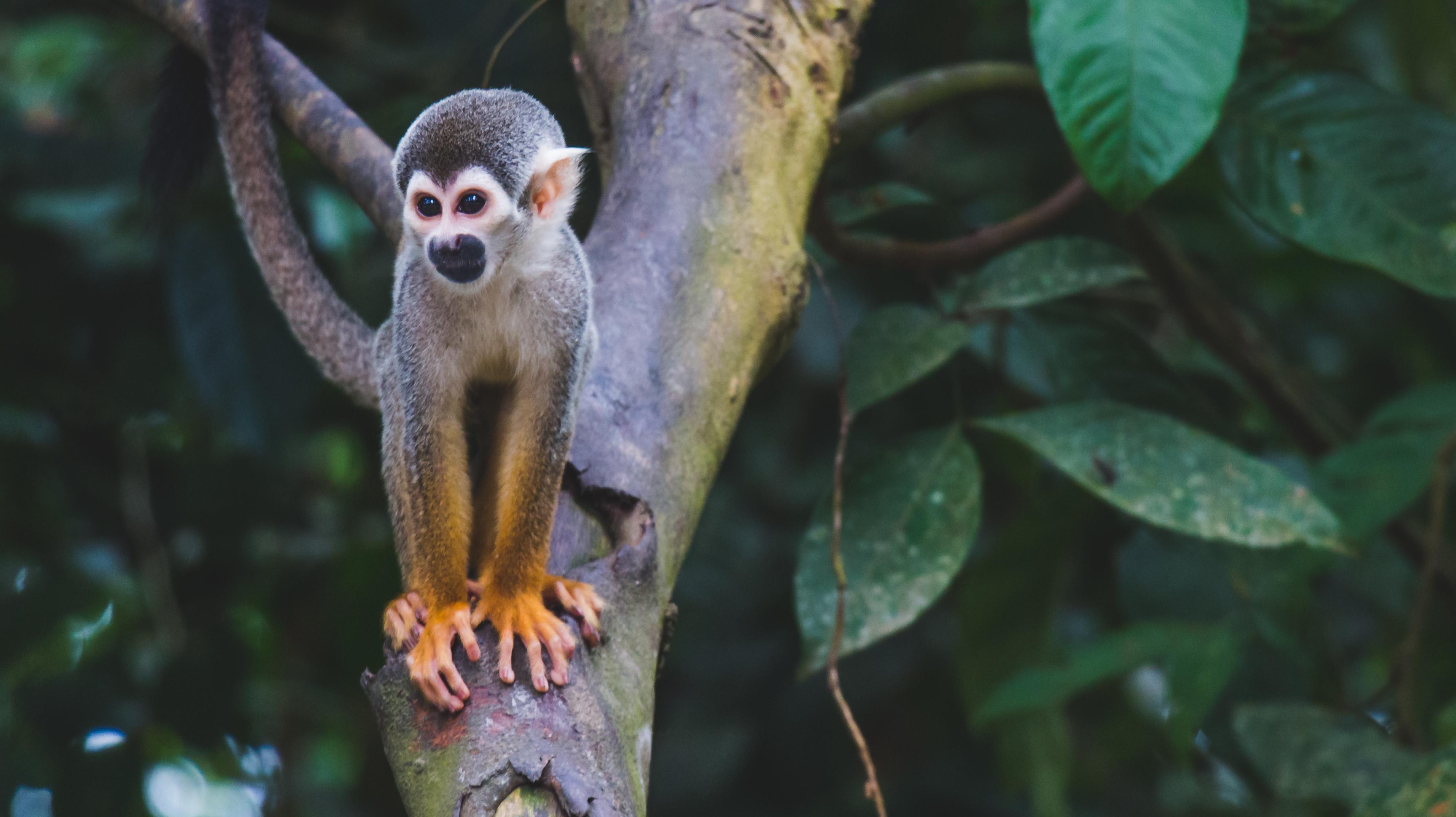 Новый препарат избавил обезьян от болезни Альцгеймера