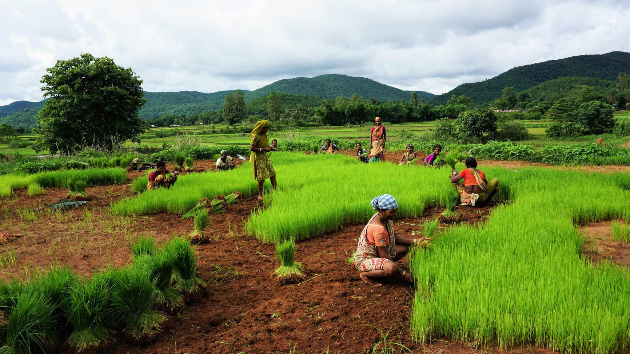 Половой диморфизм у наших предков развился не вследствие перехода к земледелию