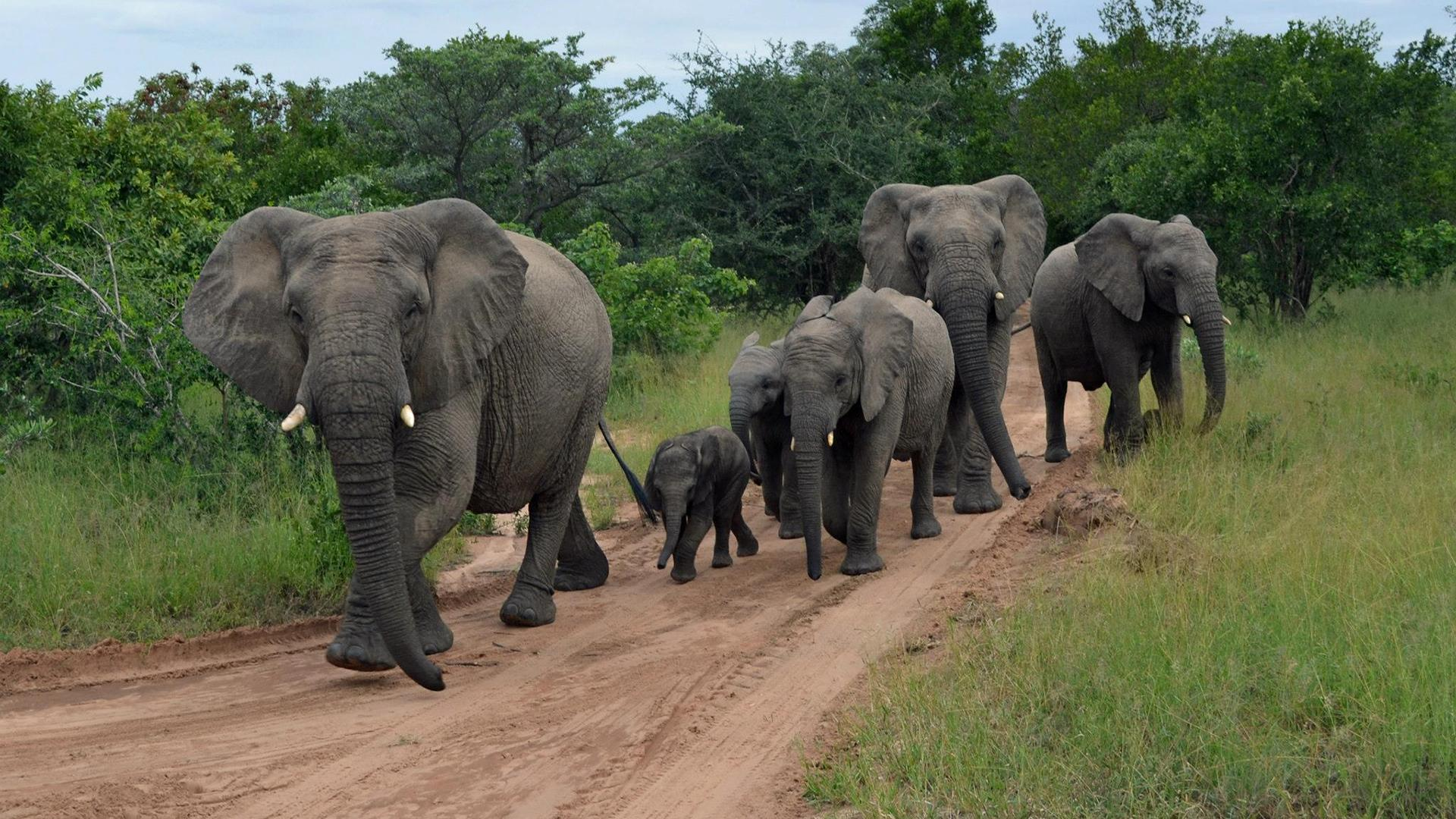У слонов нашли личностные особенности, которые помогли им лучше решать те или иные задачи