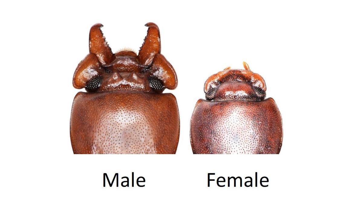 Как естественный отбор противостоит половому