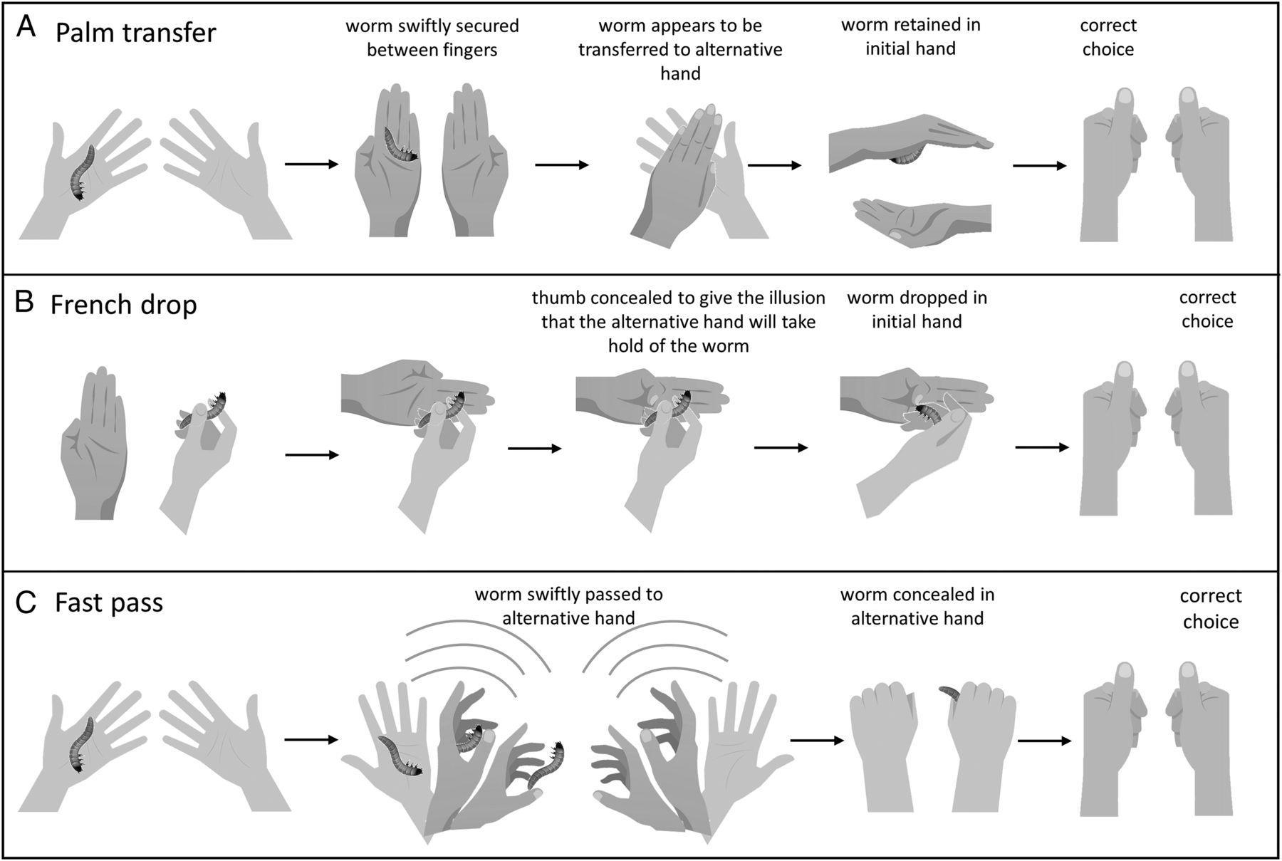 Фокусы показали особенности восприятия птиц