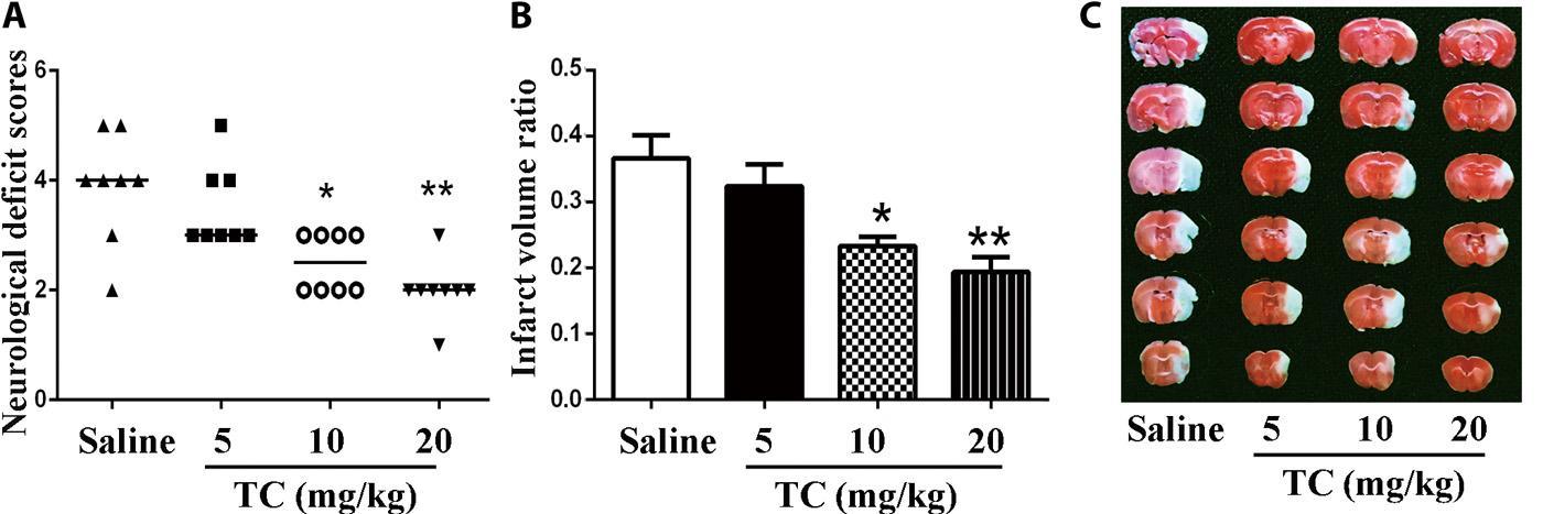 Ученые разработали белок Tat-CIRP для защиты нейронов при инсульте