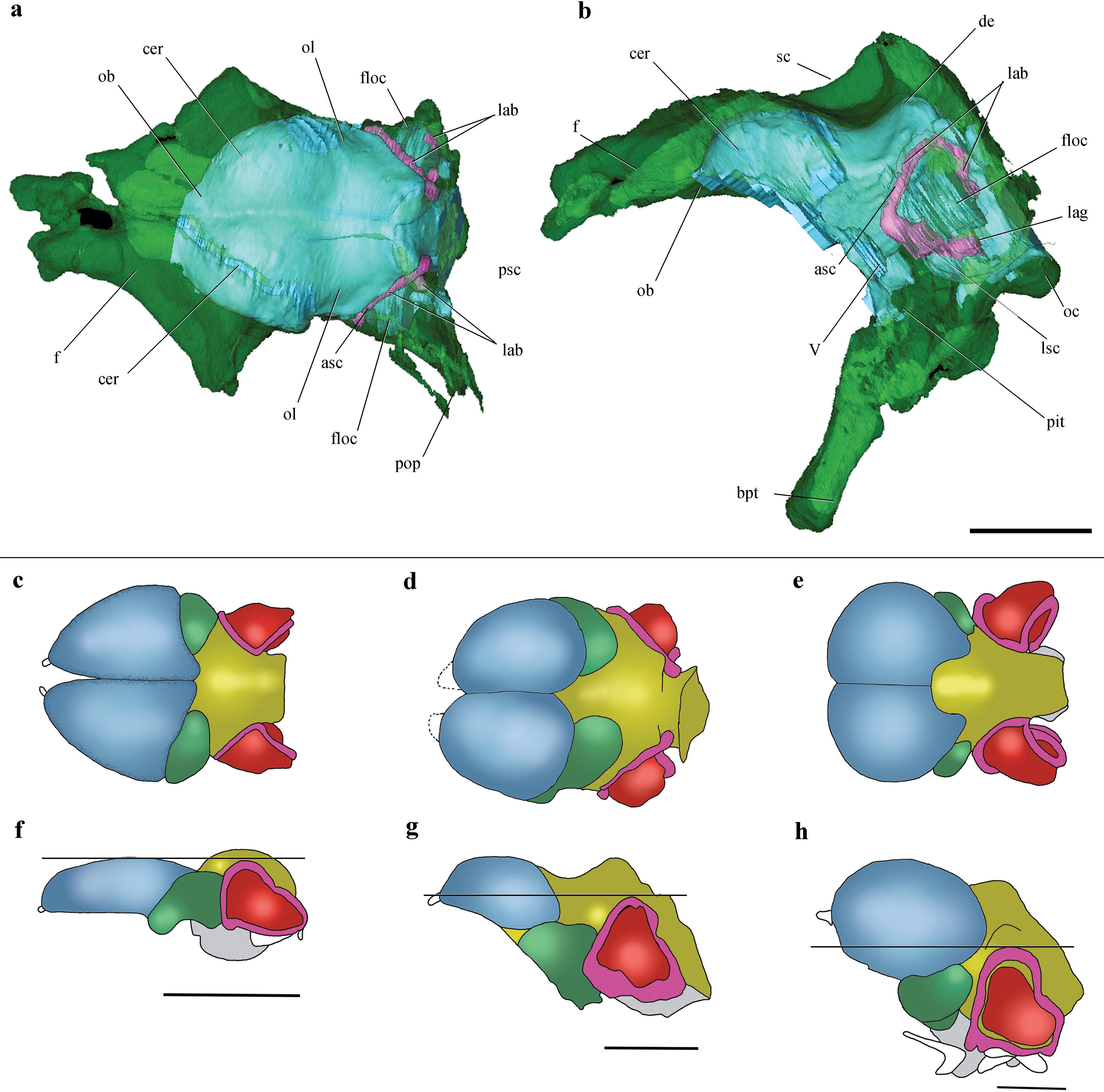 Мозг птерозавра позволил найти недостающее звено