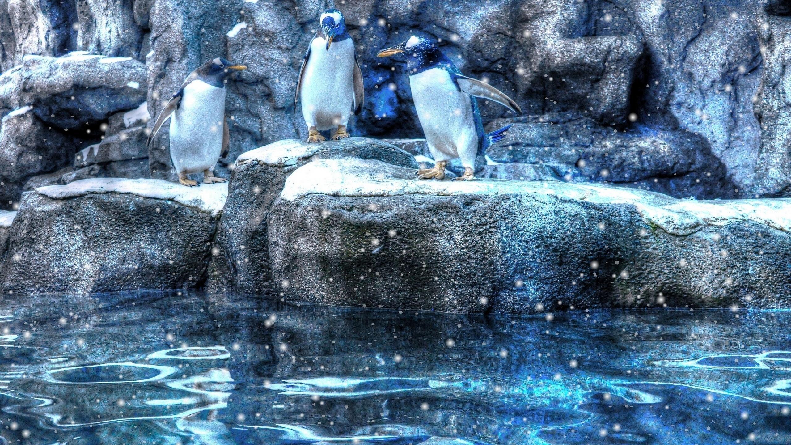 Пингвины, белые медведи и северные олени: почему холодолюбивые животные не вымирают от потепления?