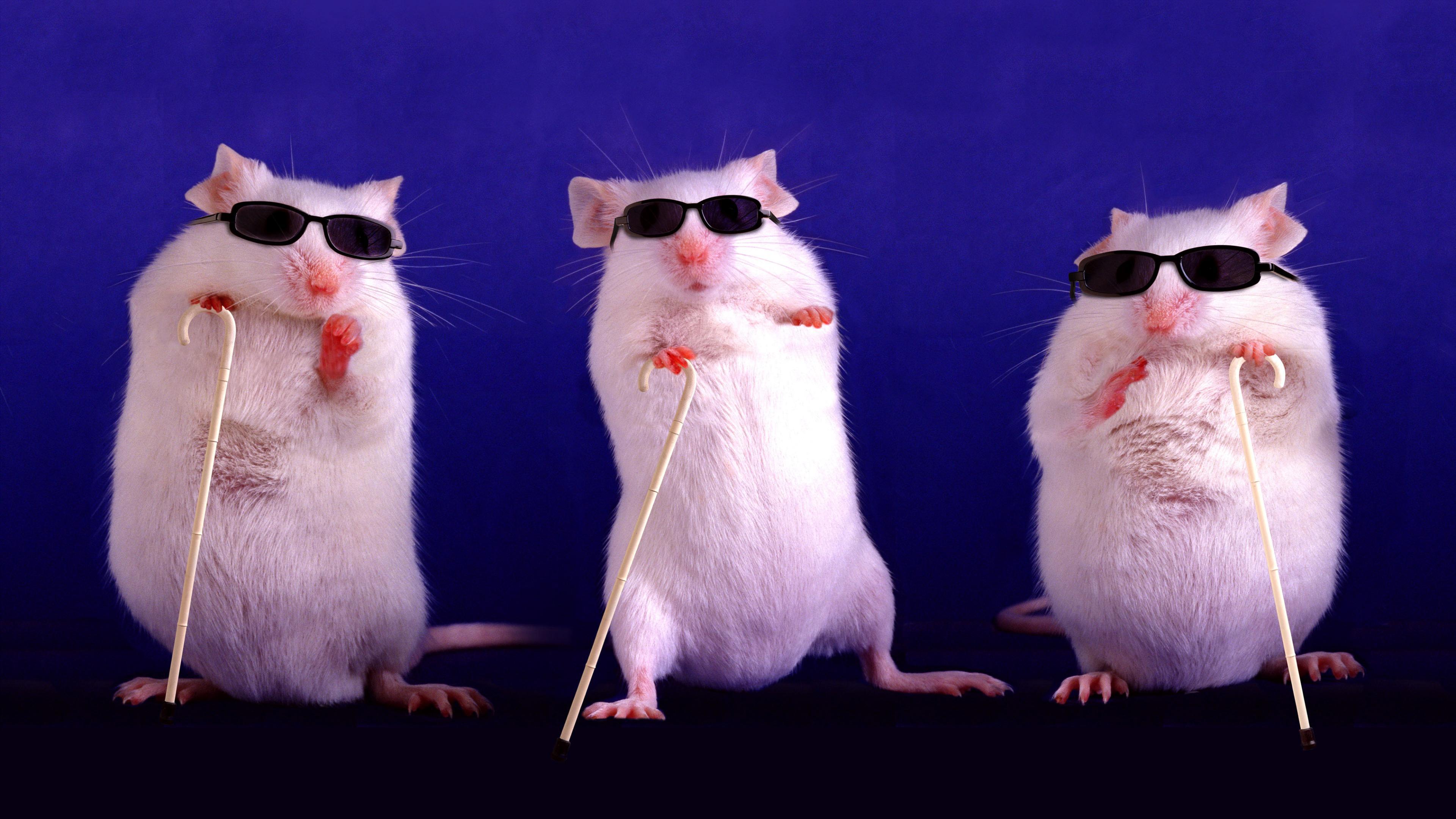 Исключение мышей из заголовка помогло научным статьям набрать популярность в СМИ