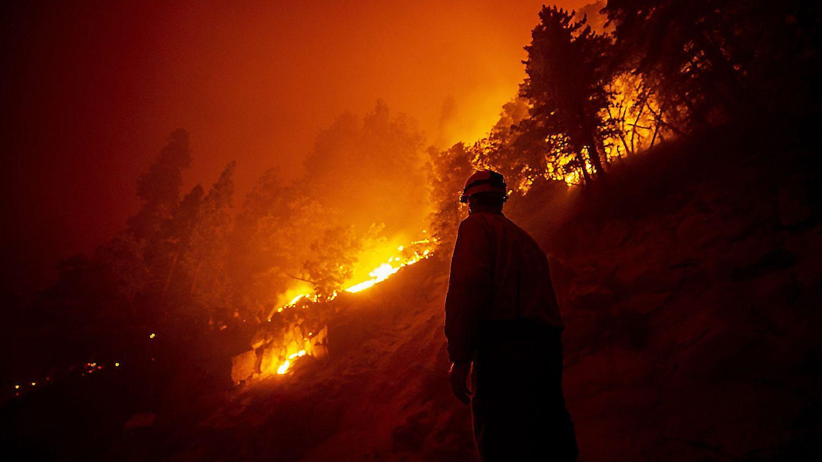 Десятая часть всех гигантских секвой мира погибла в одном пожаре 2020 года