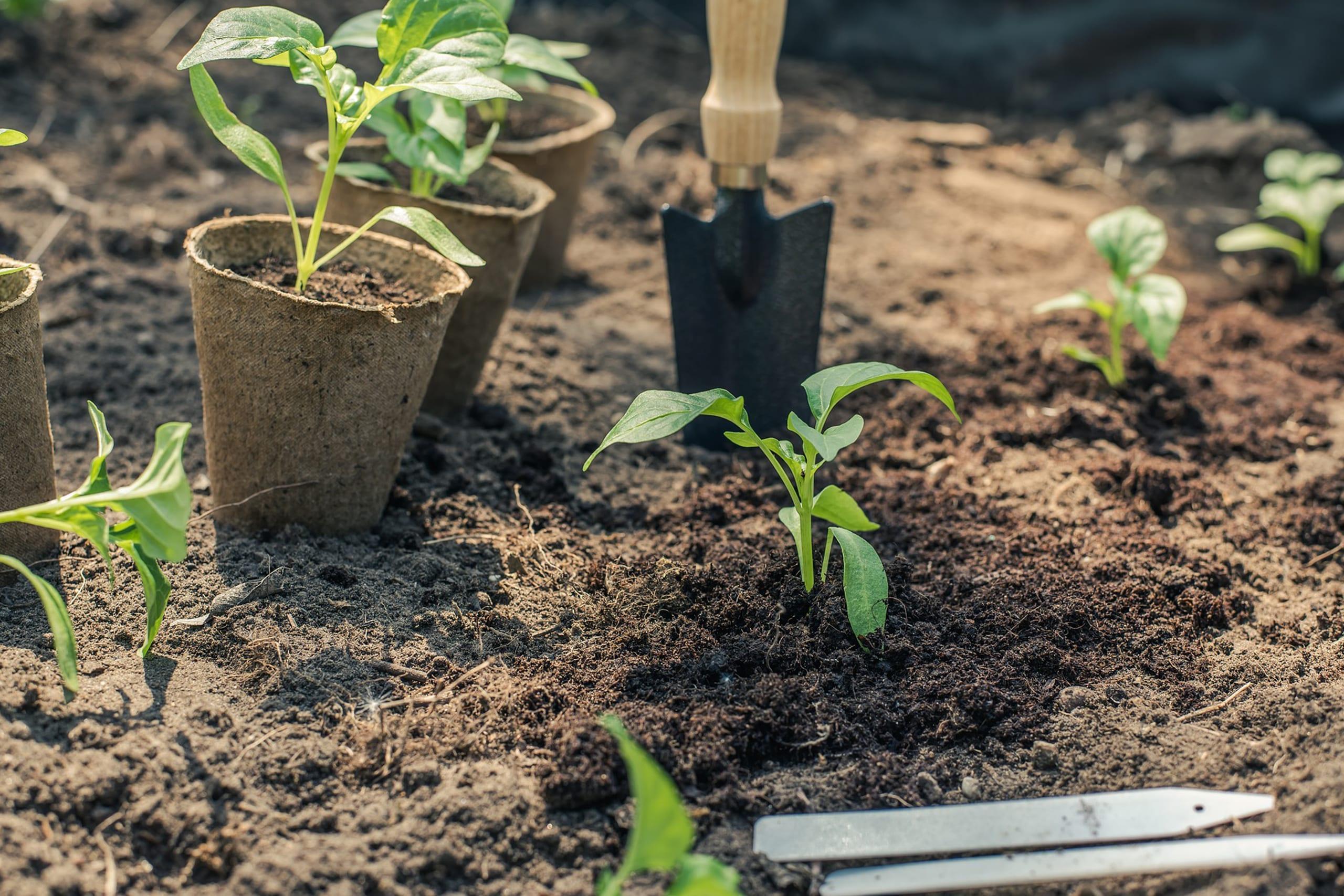 Огородные работы в июне. 10 главных мероприятий месяца