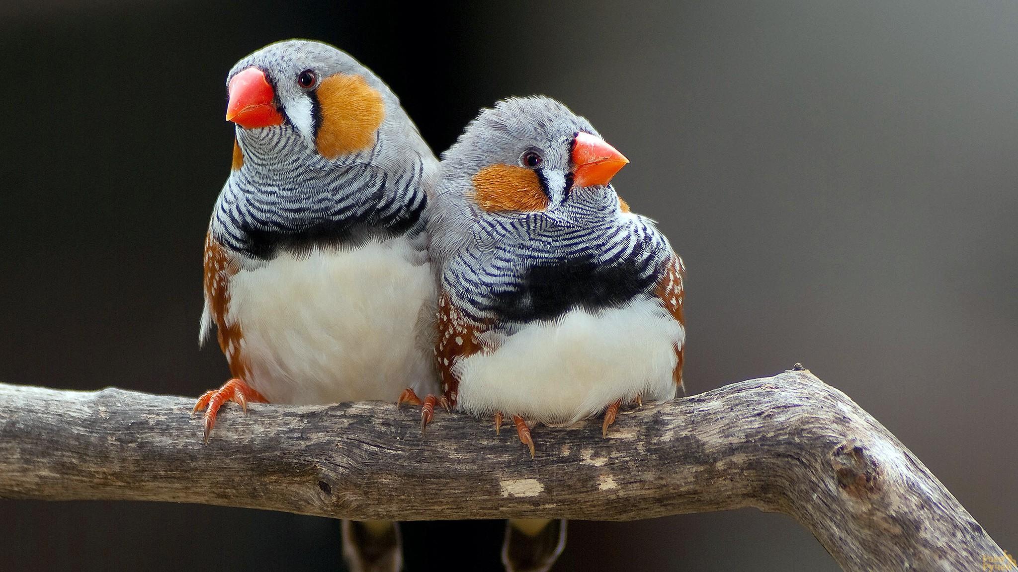 Ученые превратили активность птичьего мозга в песню