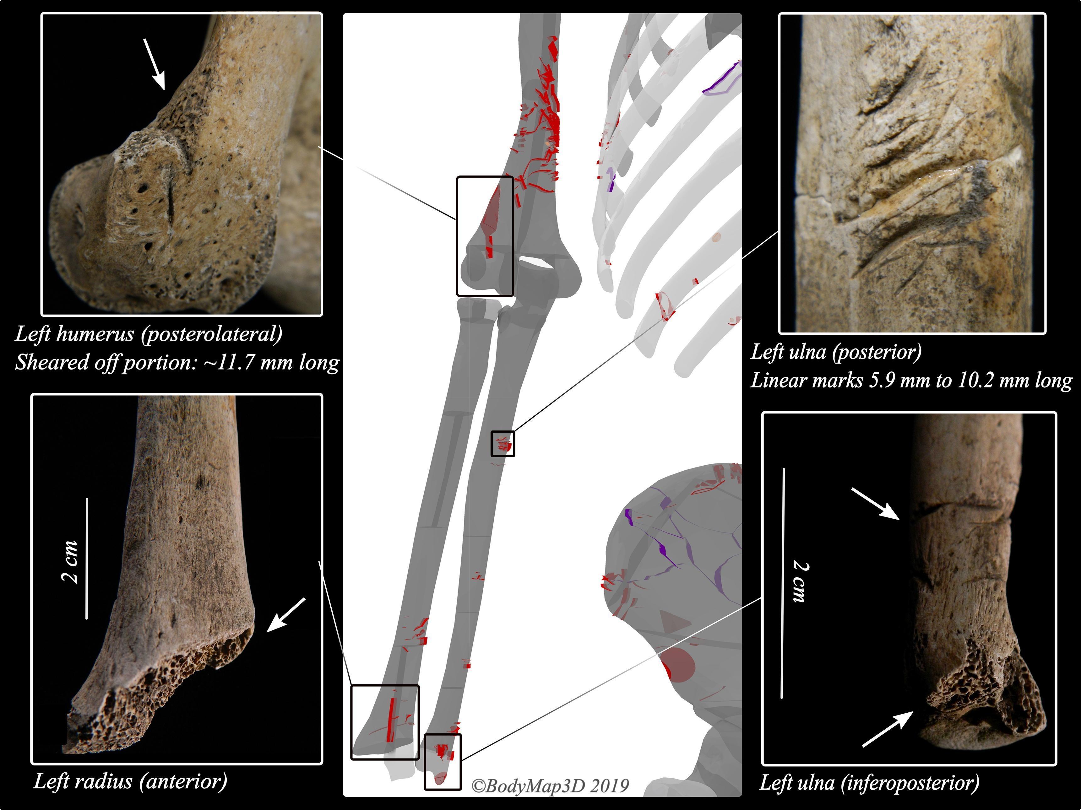 Челюсти: начало. 3000 лет назад акула пообедала человеком