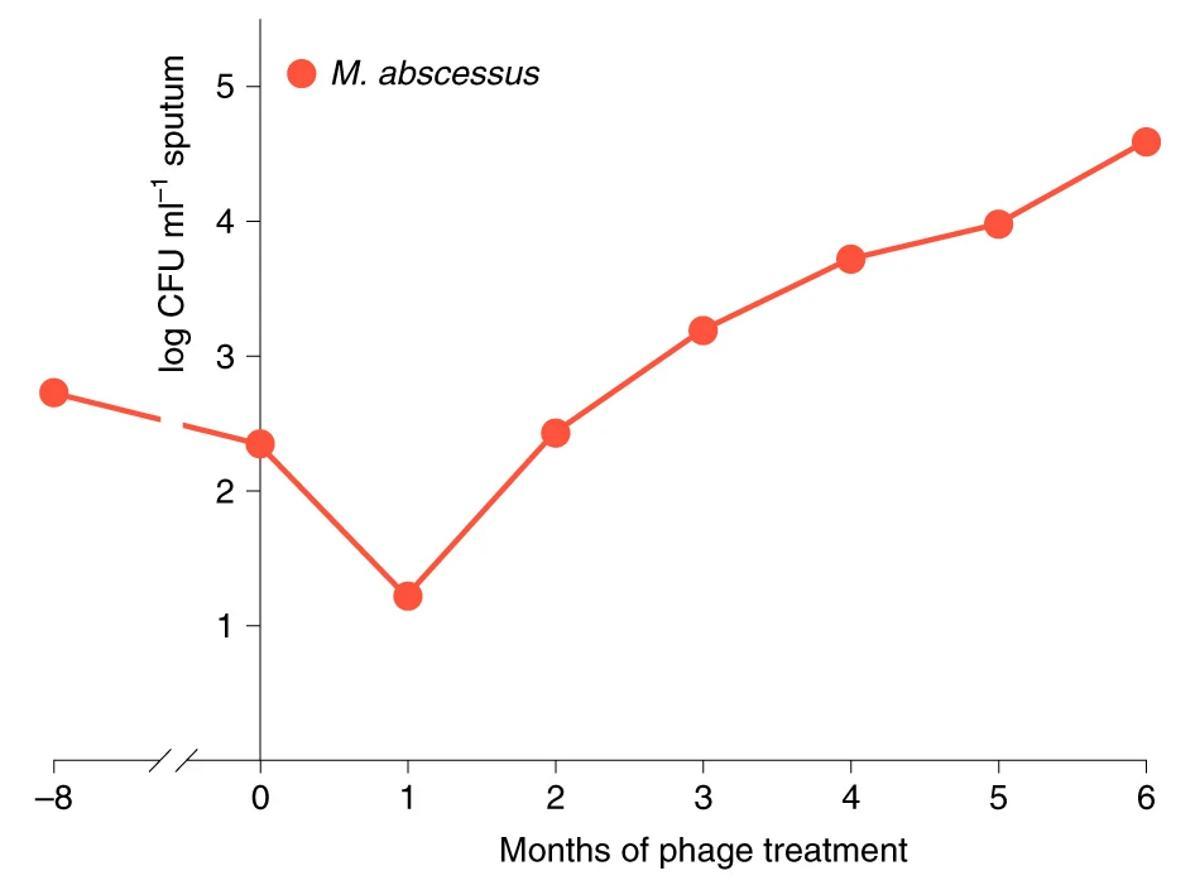 Антитела против бактериофагов помешали им вылечить инфекцию