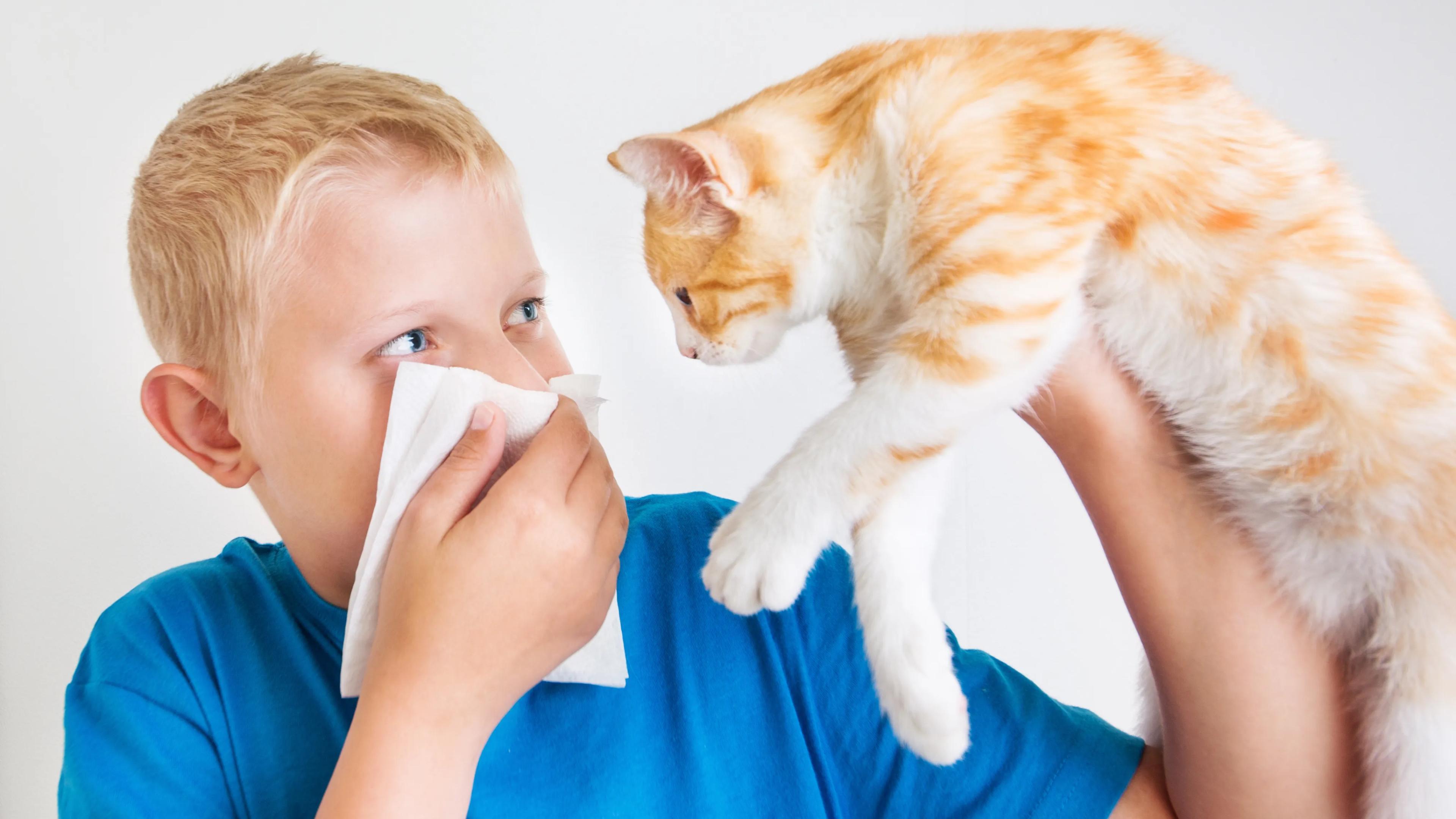Заболели ковидом? Ограничьте контакты со своим котом!