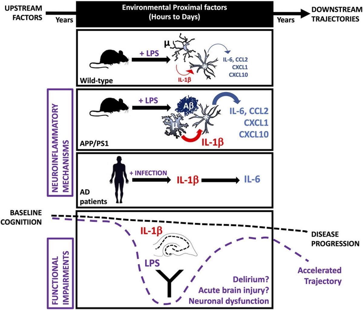 Инфекции ухудшают когнитивные способности при болезни Альцгеймера