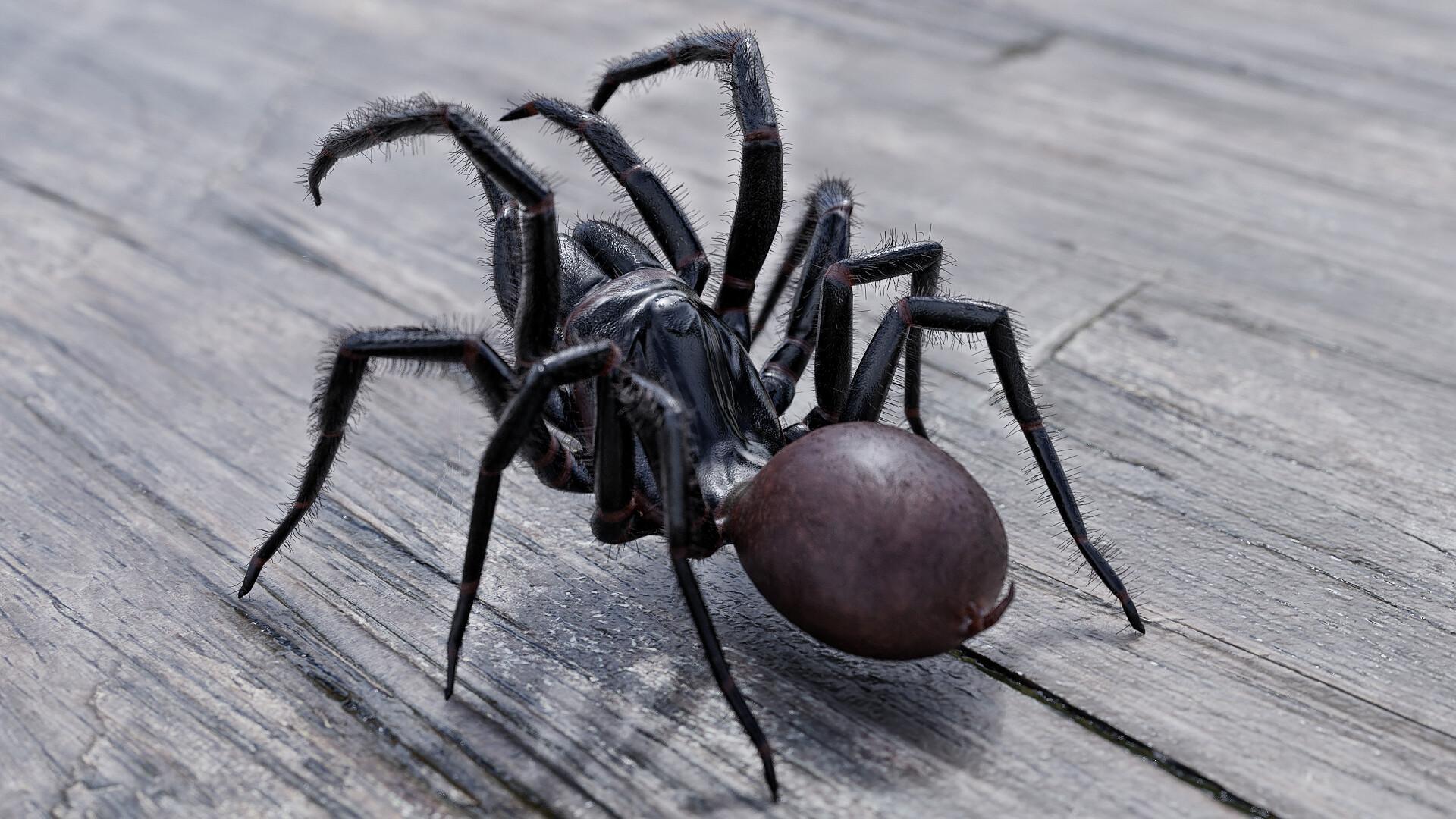 Брюшко и хелицеры оказались самыми пугающими частями тела пауков