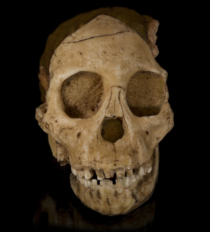 Звезда плиоценового периода. Что кости австралопитека Люси рассказали ученым