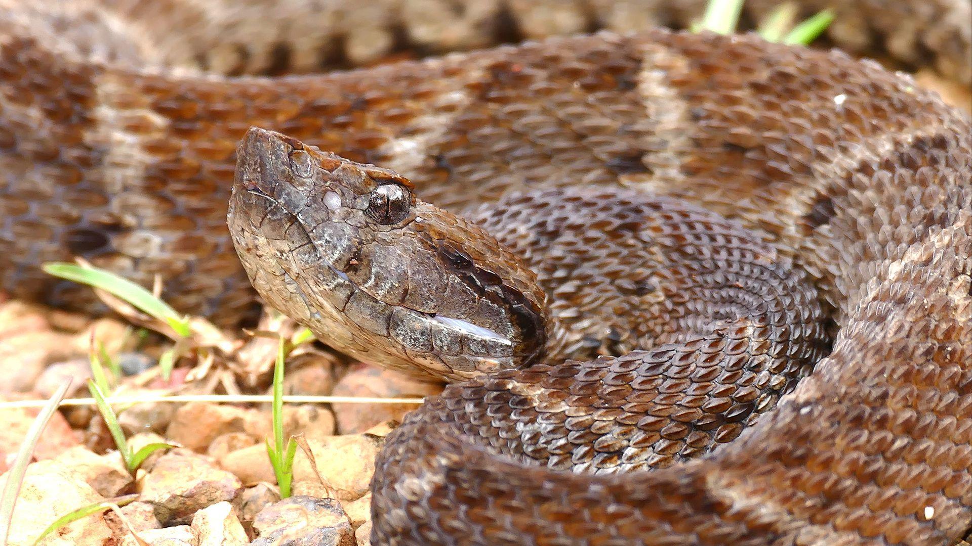 Биоклей с ферментом из яда змеи заживил крысиные раны