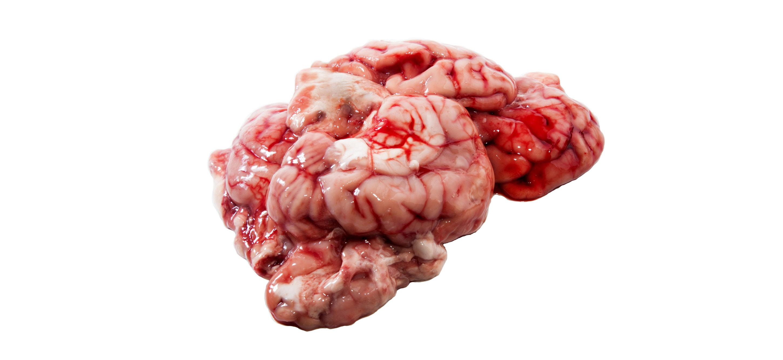 Учёные частично восстанавливают активность головного мозга мёртвых свиней