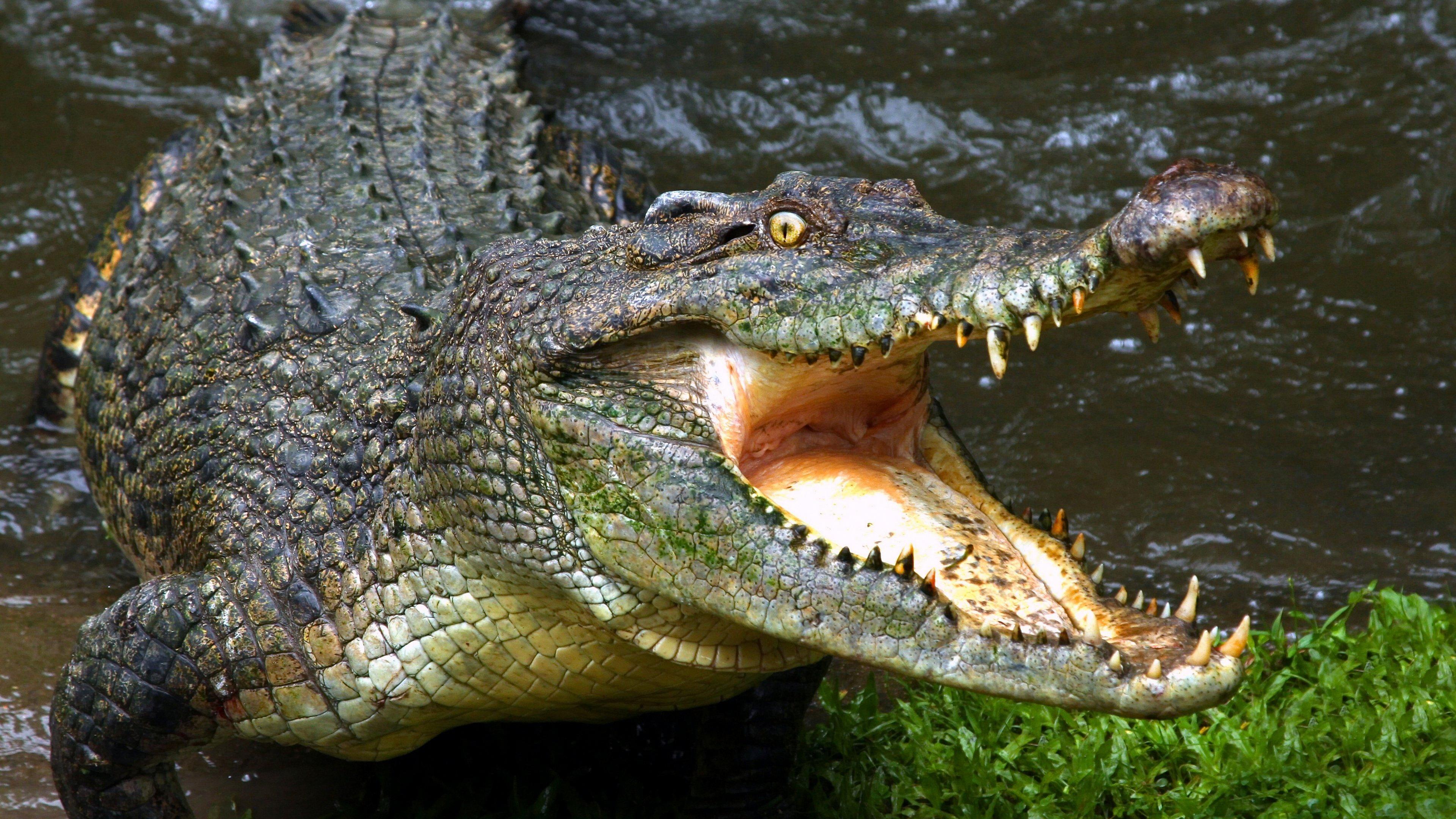 Ученые впервые описали все структуры мозговой коробки крокодила, изучив более 70 их 3D-моделей