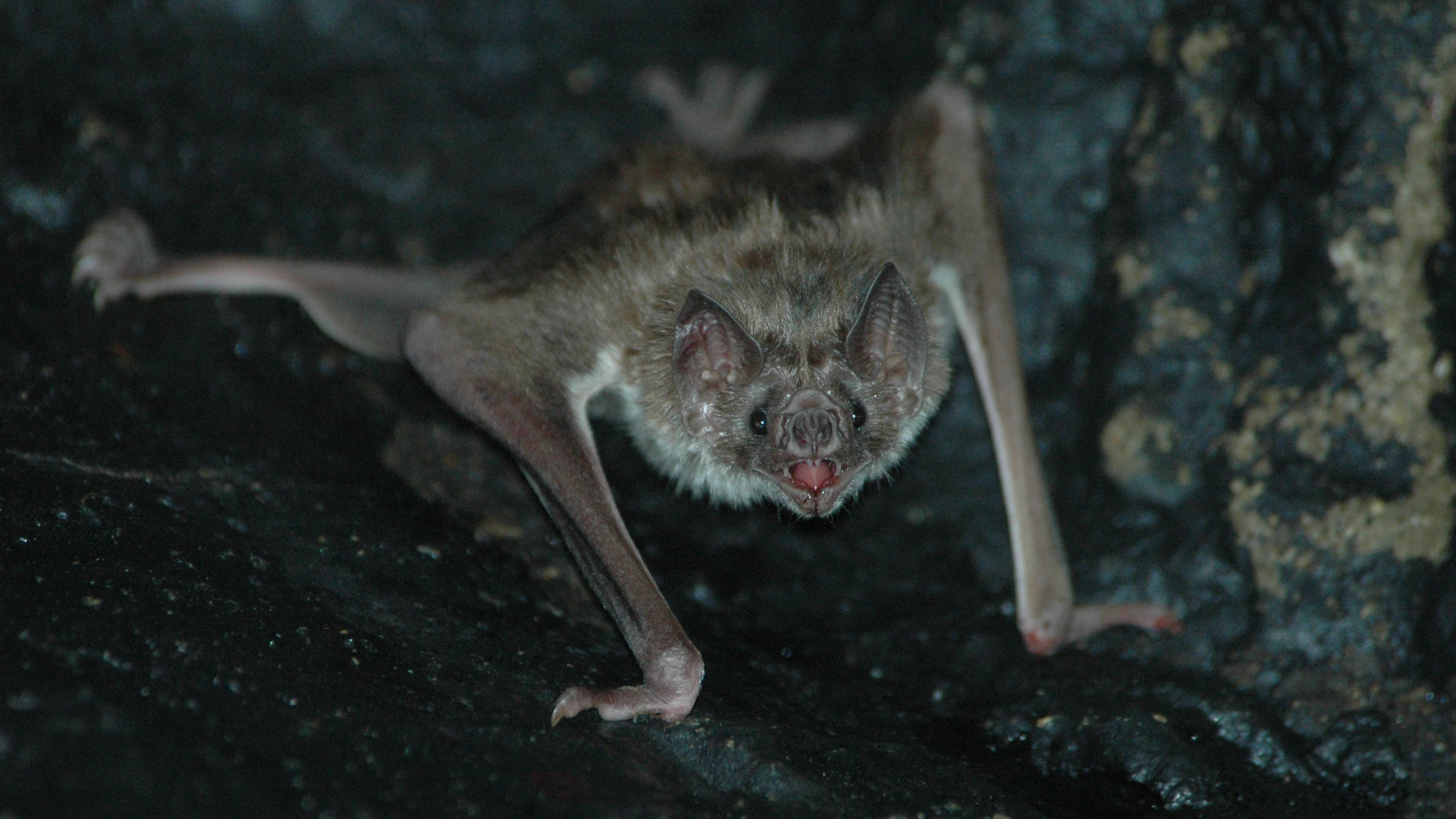 Самки вампиров позаботились о сородичах невзирая на их социальный статус