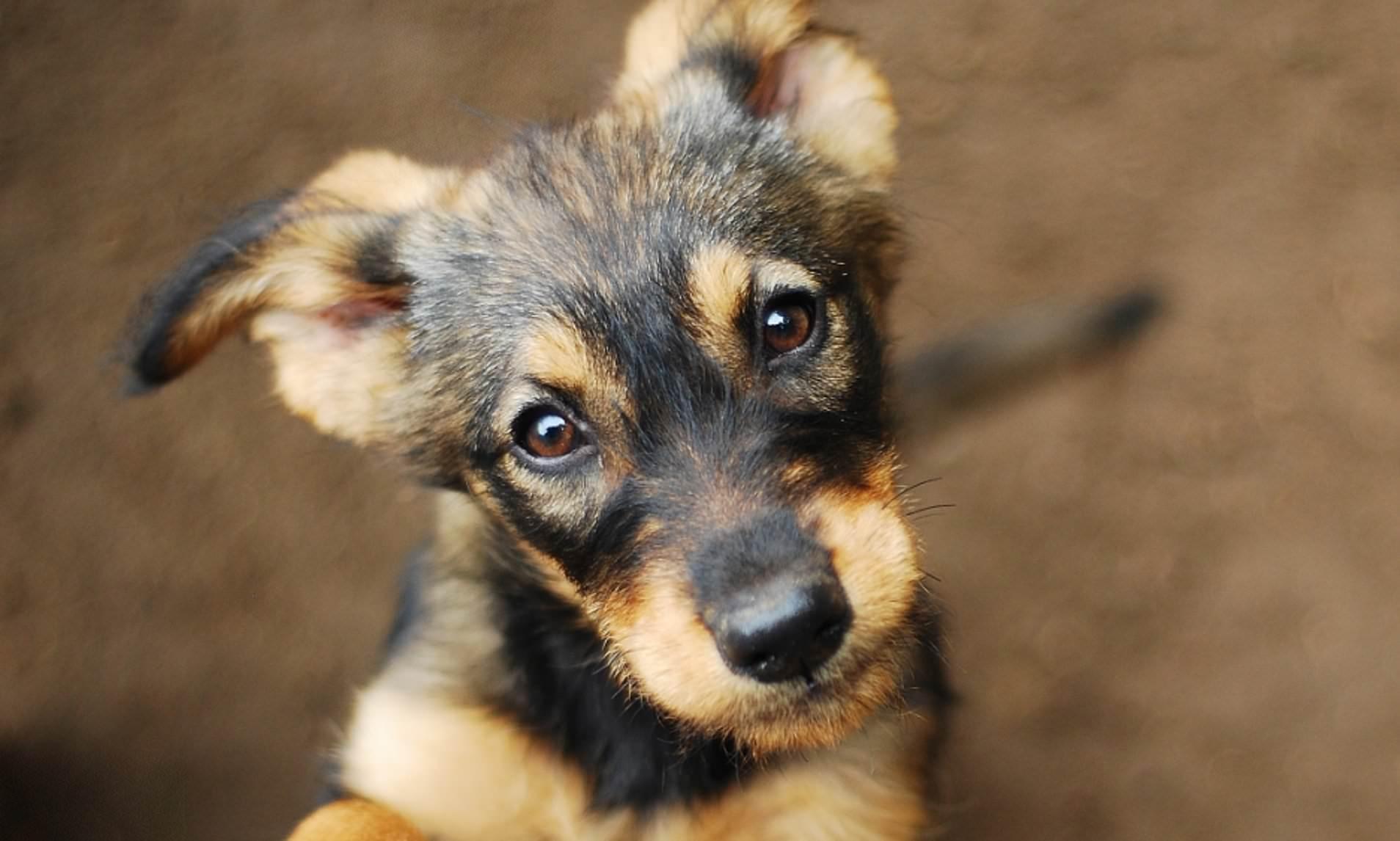 У собак обнаружили способность распознавать человеческую ложь