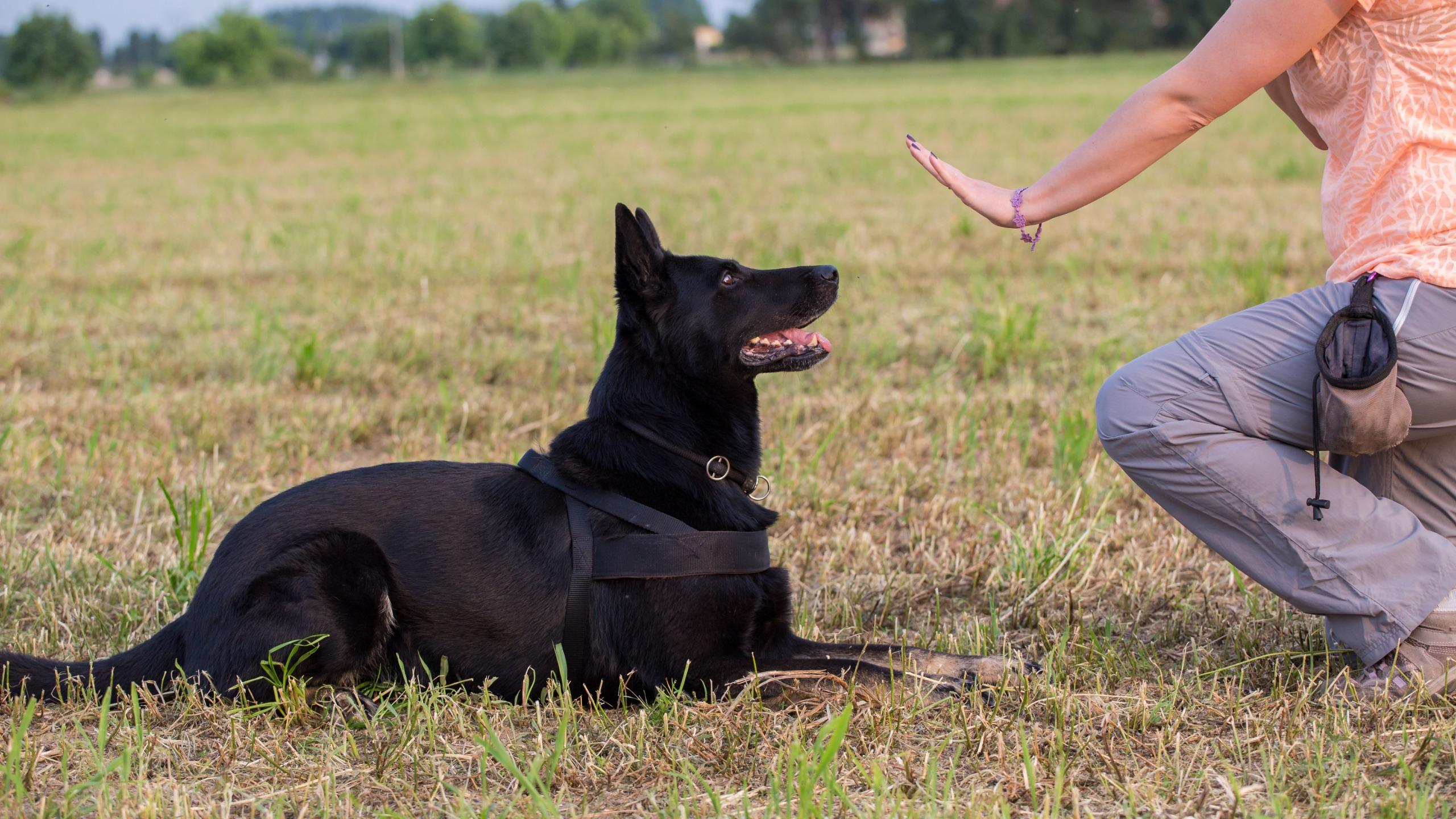 У собак, в отличие от волков, нашли врожденные способности к пониманию человеческих жестов