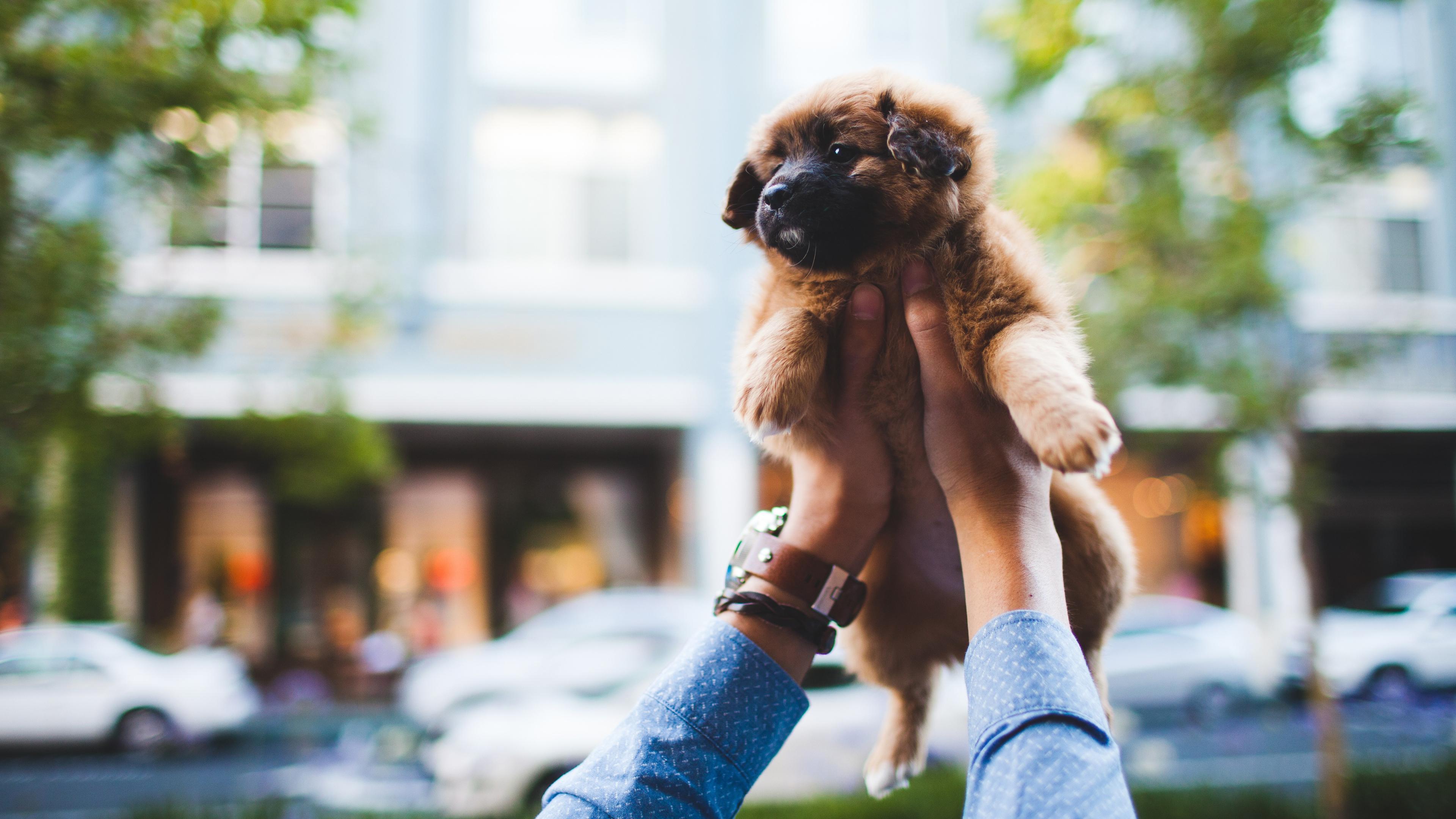 Устойчивость к антибиотикам может передаваться от собак их владельцам