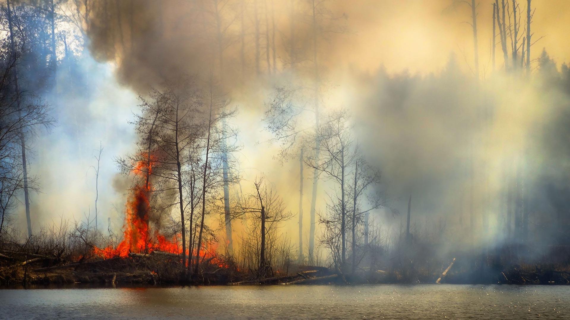 Лесные пожары увеличивают риск заражения коронавирусом в близлежащих городах