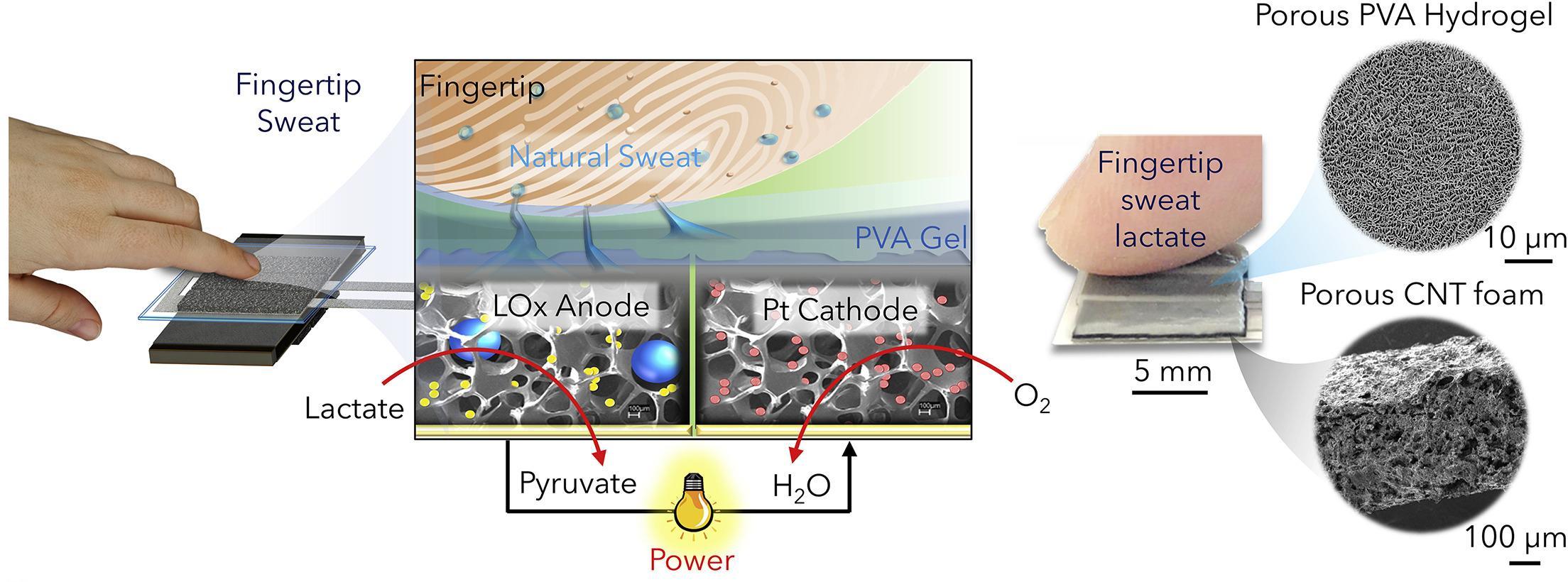Углеродные нанотрубки и лактатоксидаза помогли получить электричество из спящих людей