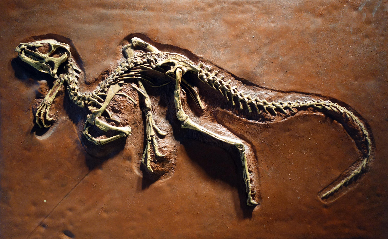Палеонтологи выяснили, что динозавры могли дышать по-разному