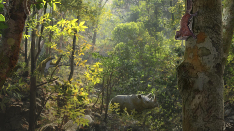 Изменение климата вынудило иберийских неандертальцев заселить леса