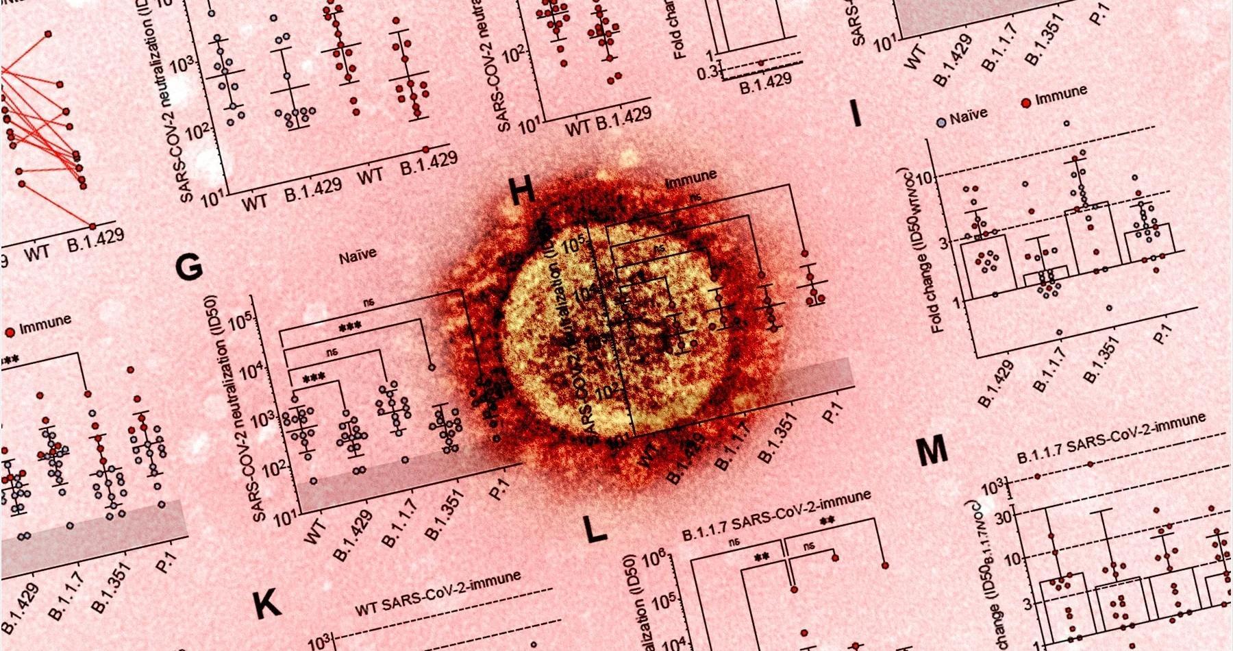 Плазма крови привитых вакциной Pfizer оказалась втрое слабее против «эпсилон-штамма» коронавируса