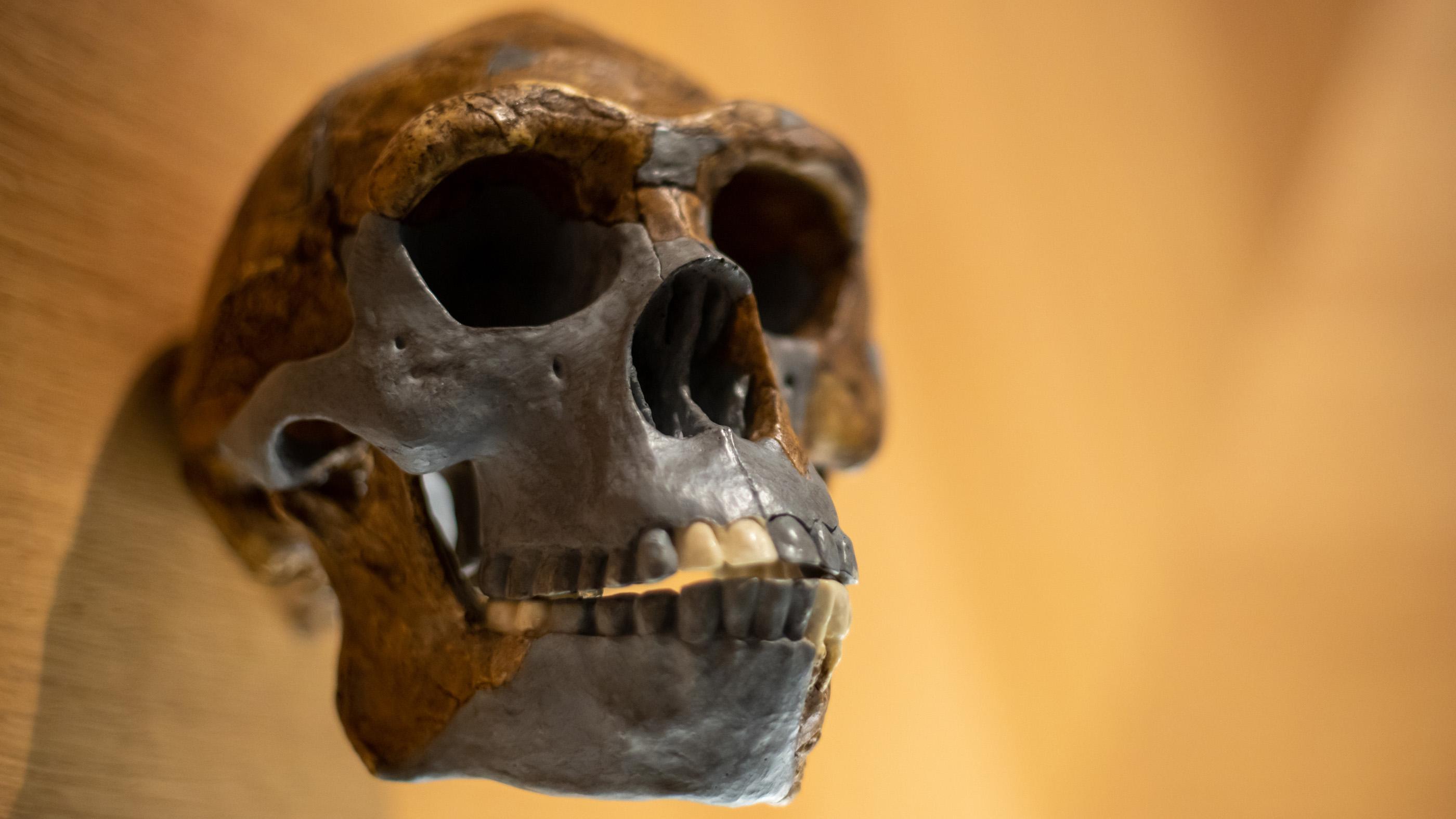 Геном современных людей оказался уникален на 1,5–7 процентов