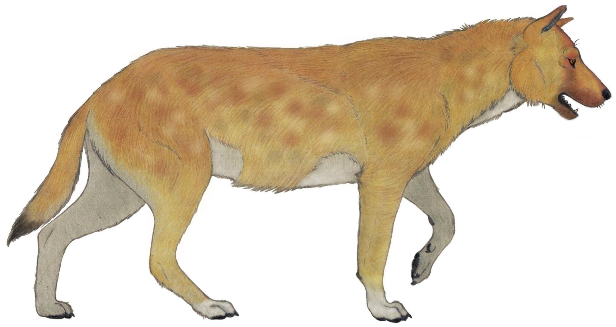 Древние собаки жили рядом с предками человека уже 1,8 миллиона лет назад
