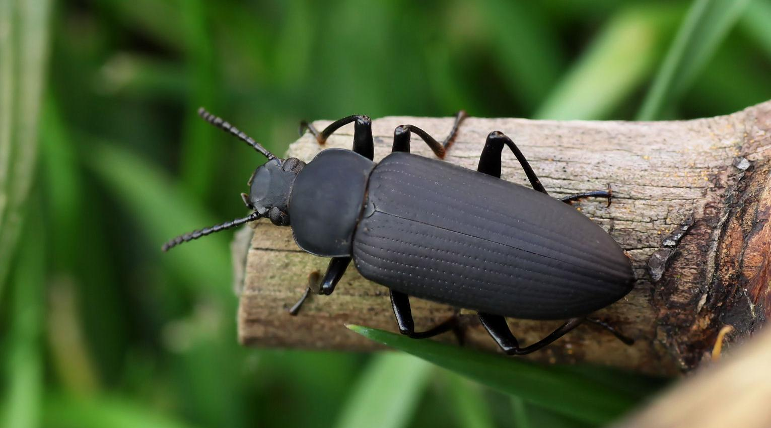 В лапках жуков обнаружили смазочный материал лучше тефлона