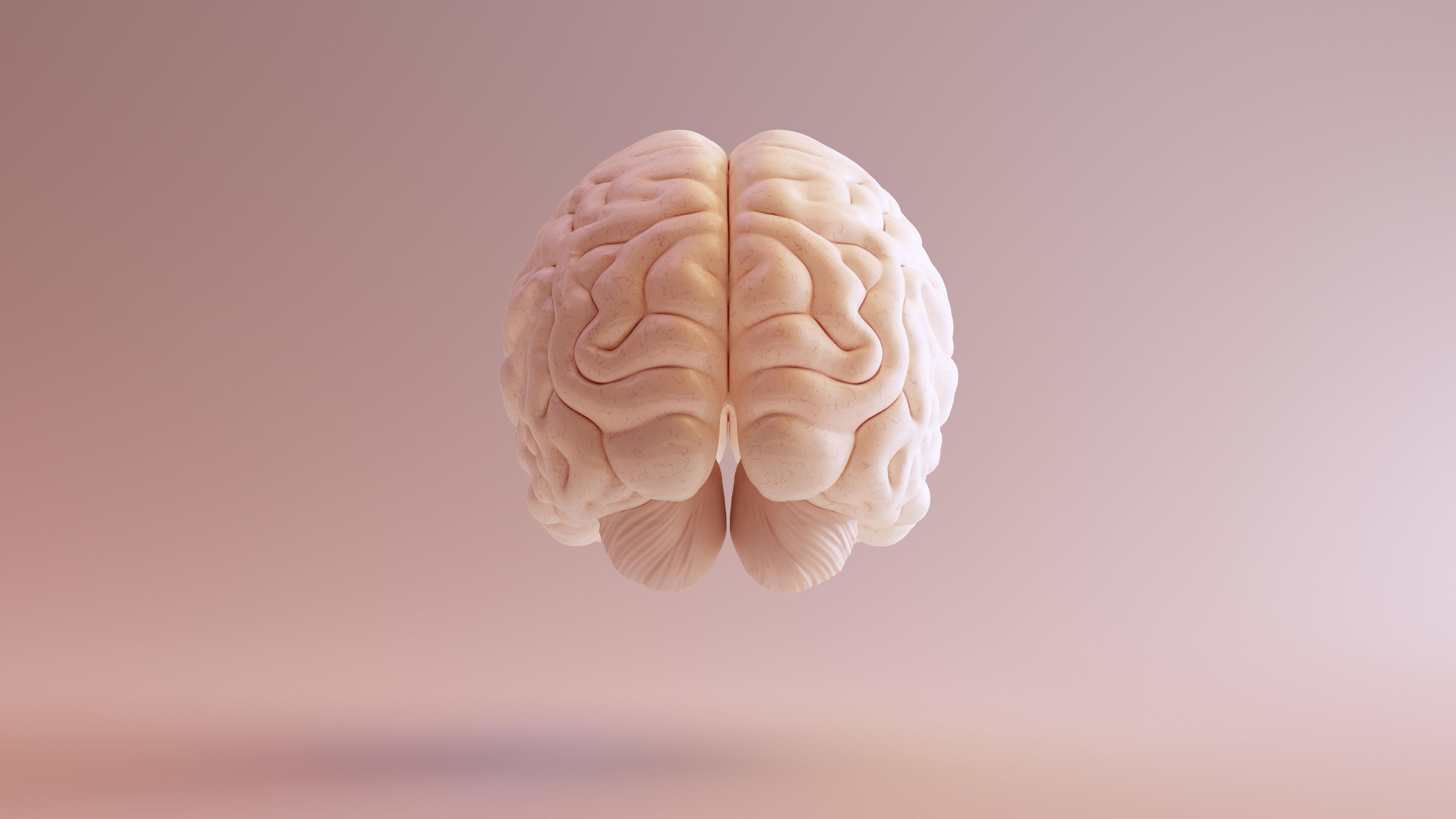 Бурый жир помогает мозгу работать