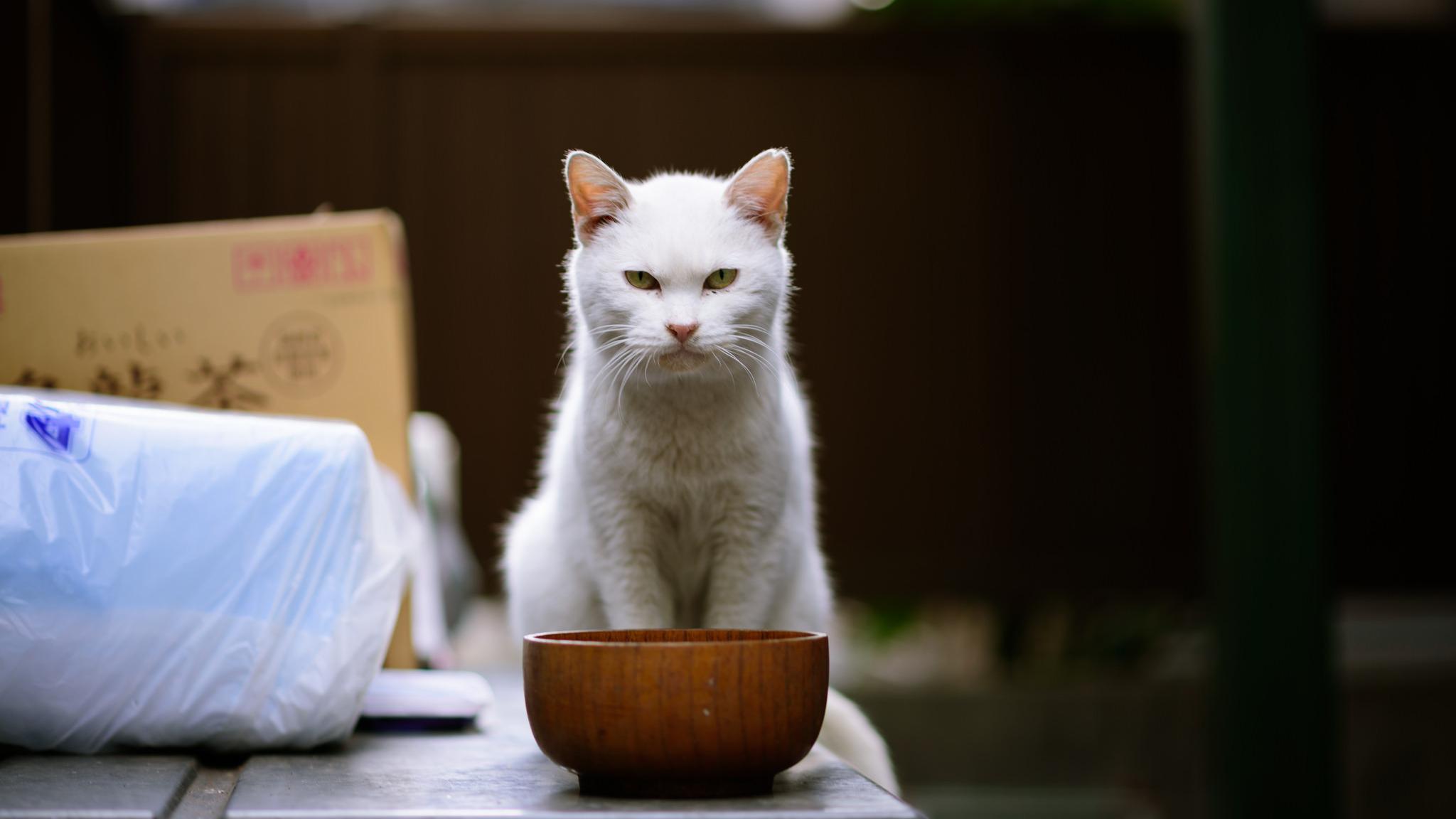 Кошки оказались «ленивее» многих других животных