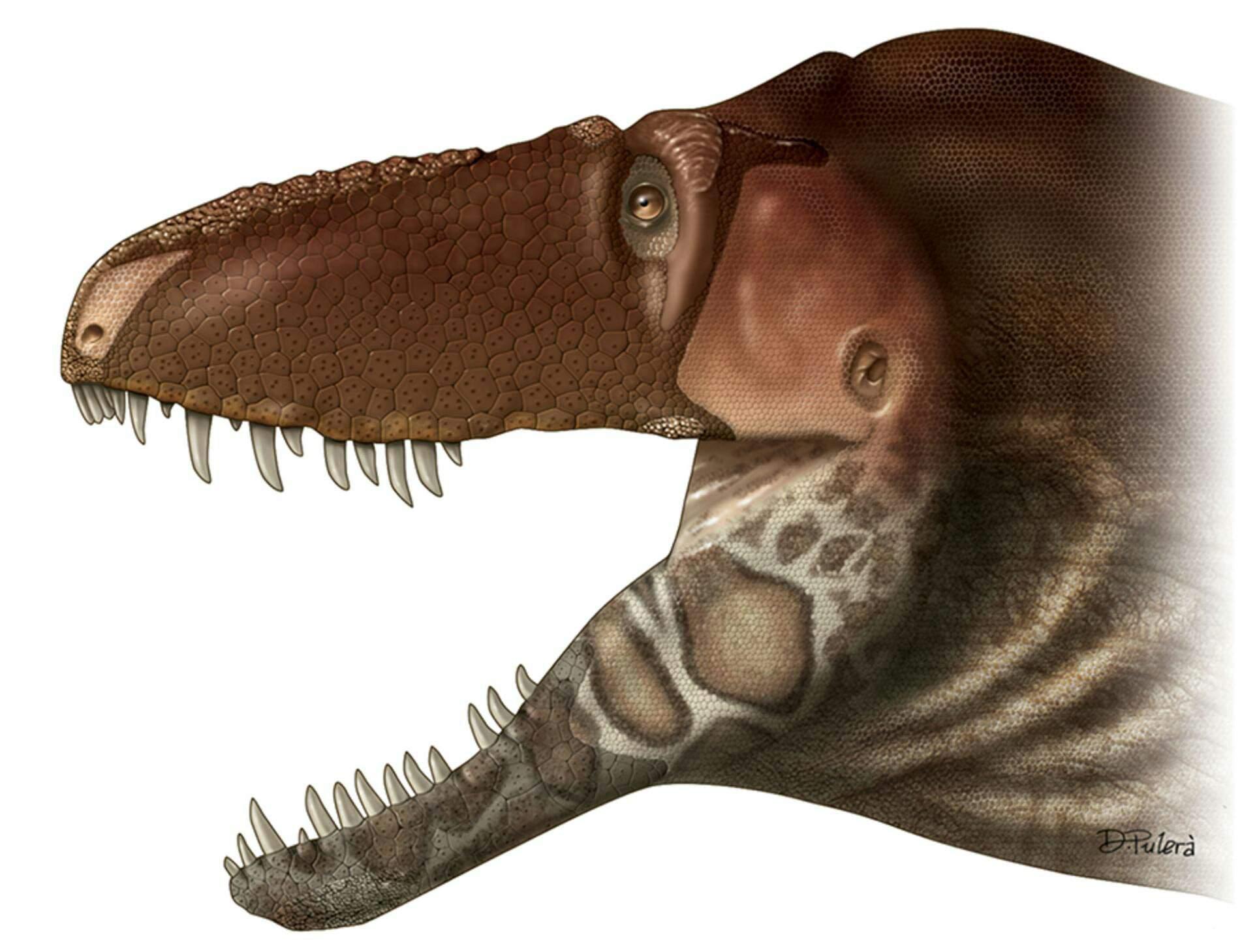 Тираннозавриду «подарили» еще один орган чувств