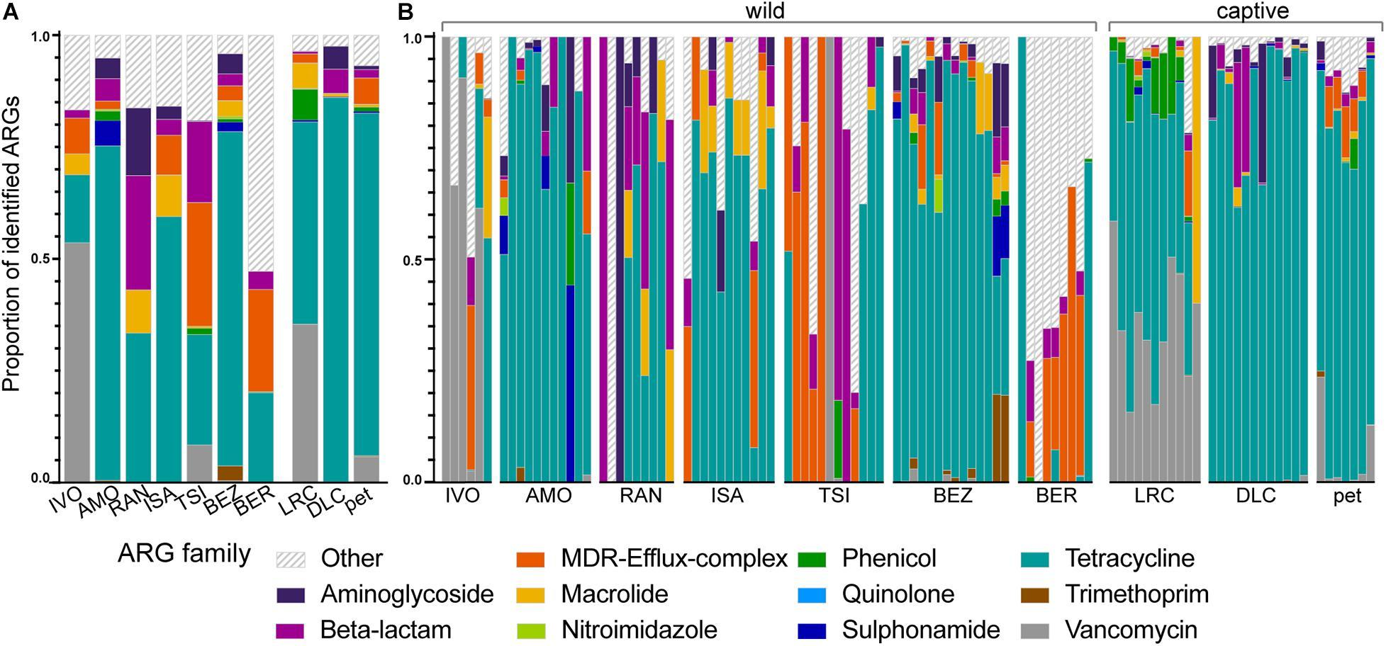 Бактерии живущих с людьми лемуров оказались устойчивы к антибиотикам