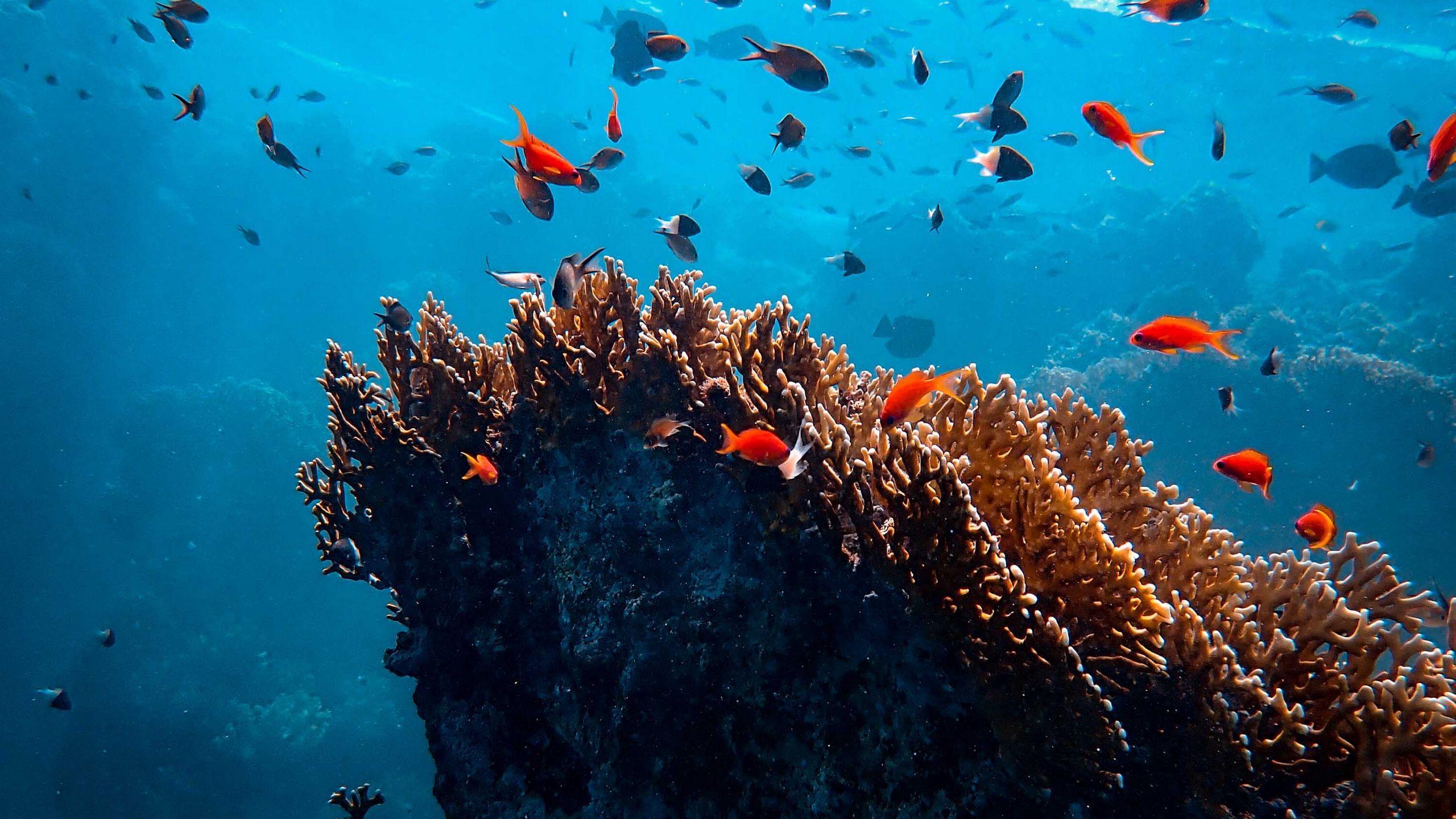 Пробиотики помогают лабораторным кораллам пережить тепловой стресс
