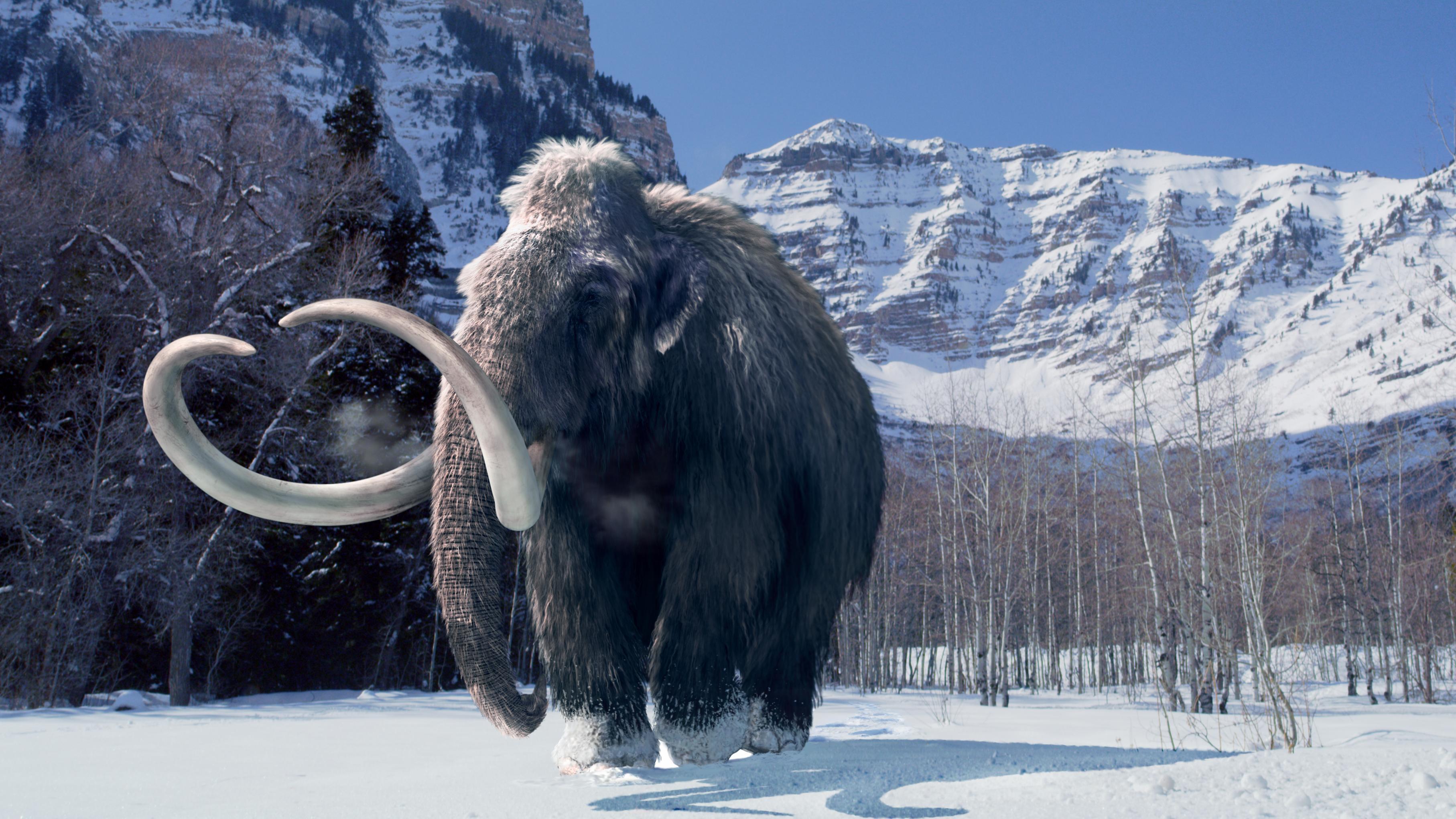 Биографию мамонта прочитали по его бивню
