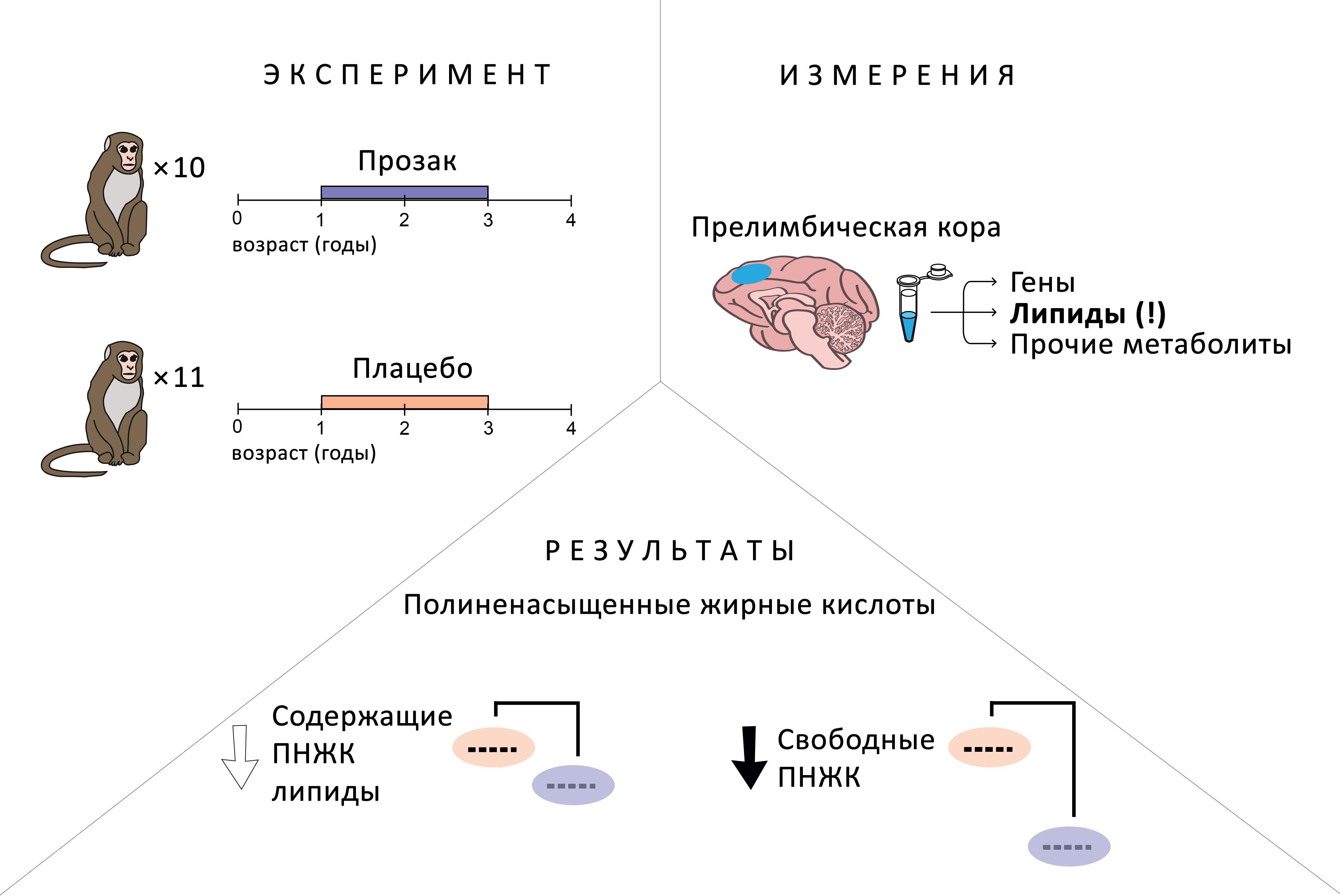 Прием антидепрессантов повлиял на уровень липидов в мозге