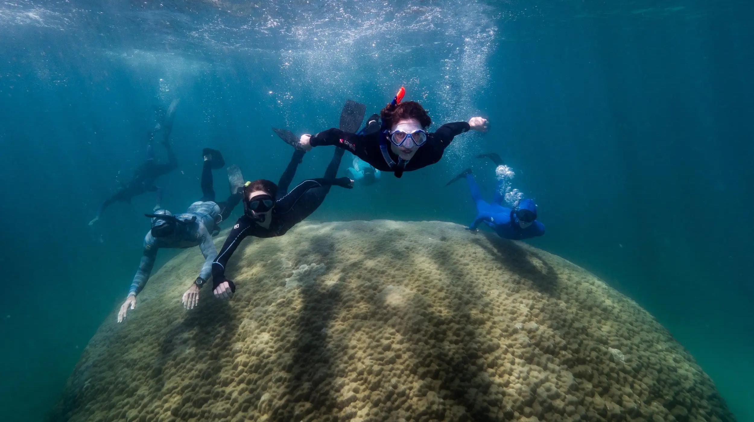 Обнаружен самый большой по ширине коралл из когда-либо найденных в Большом Барьерном рифе