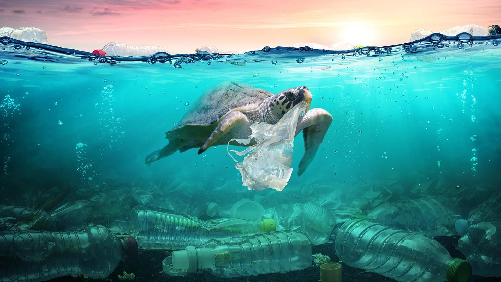 Пластиковый мусор загнал морских черепах в «эволюционную ловушку»