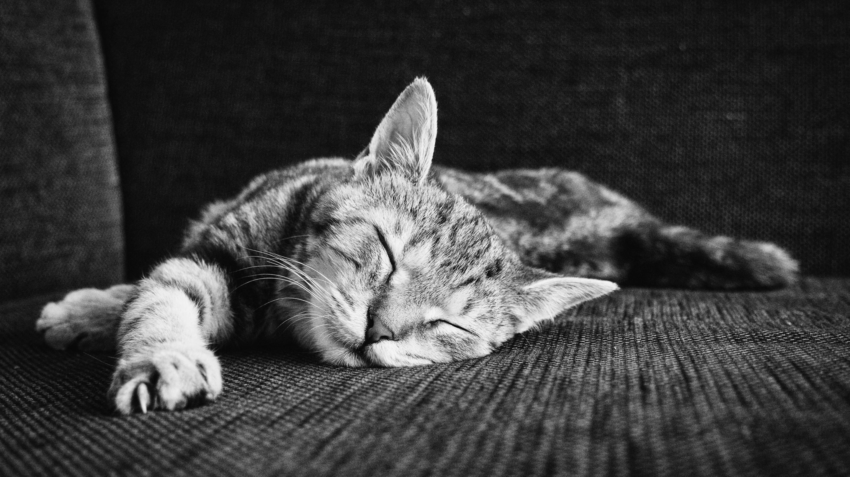 Кора головного мозга и гиппокамп обеспечивают «сонные» ритмы