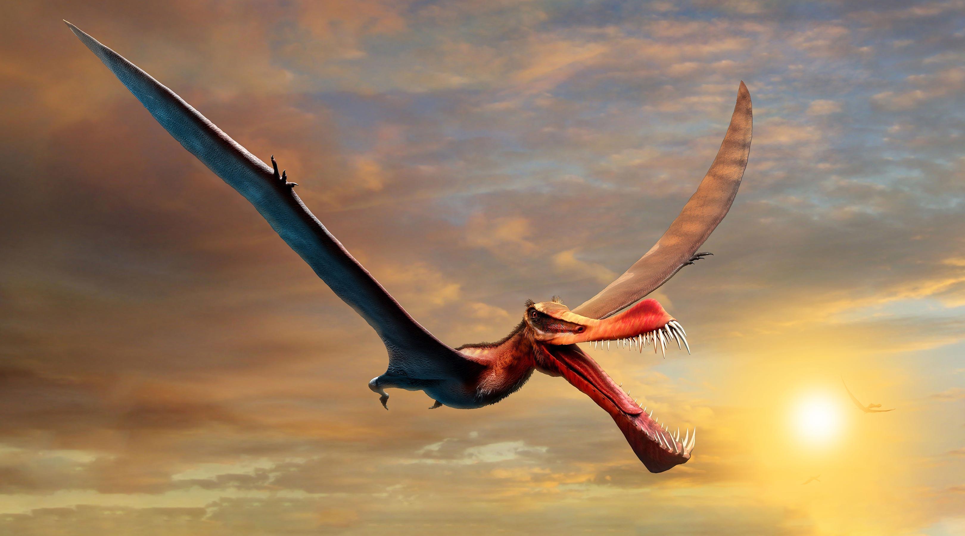 Ученые обнаружили останки одного из самых крупных птерозавров