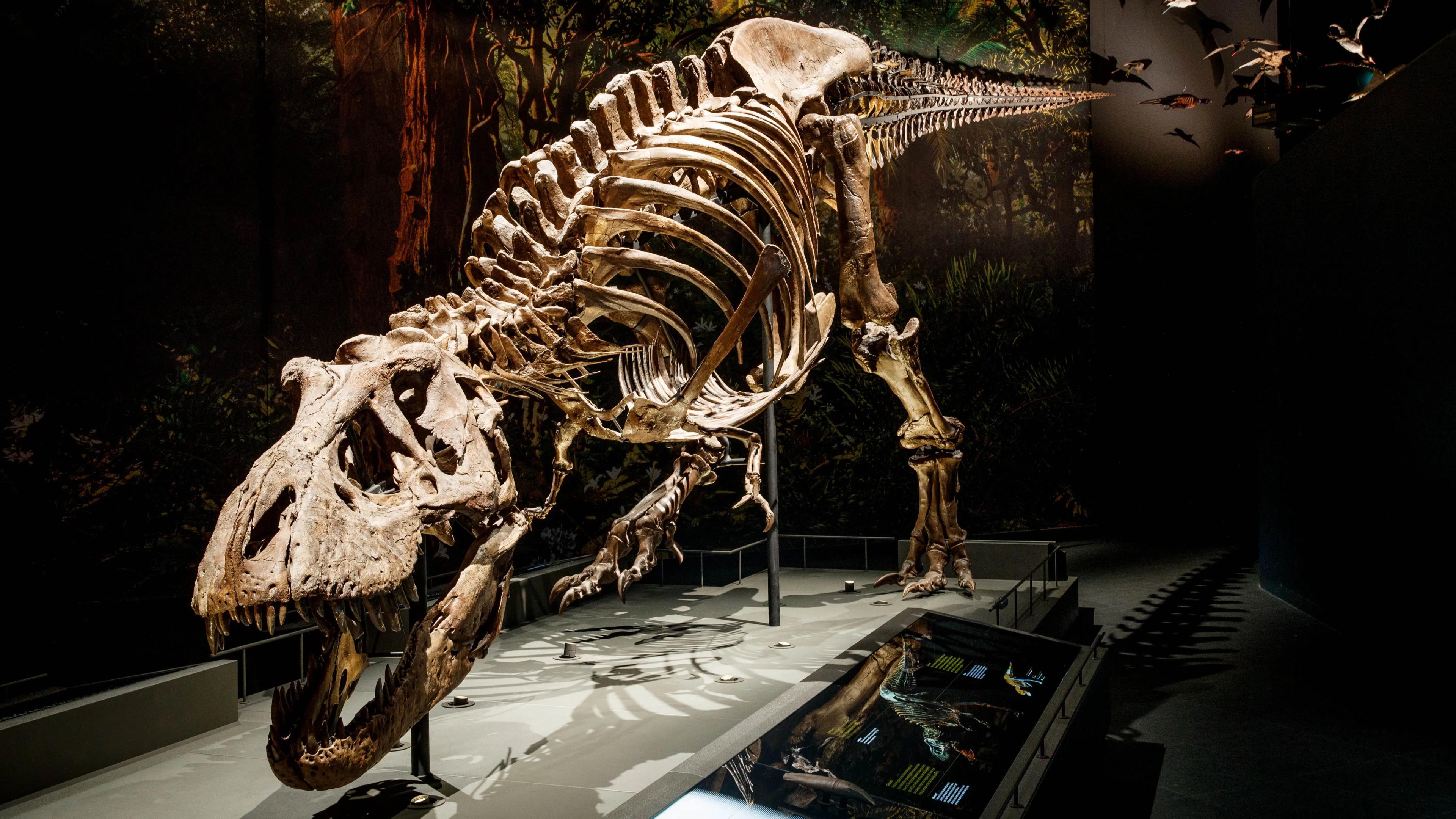Тираннозавр оказался обладателем чувствительных челюстей